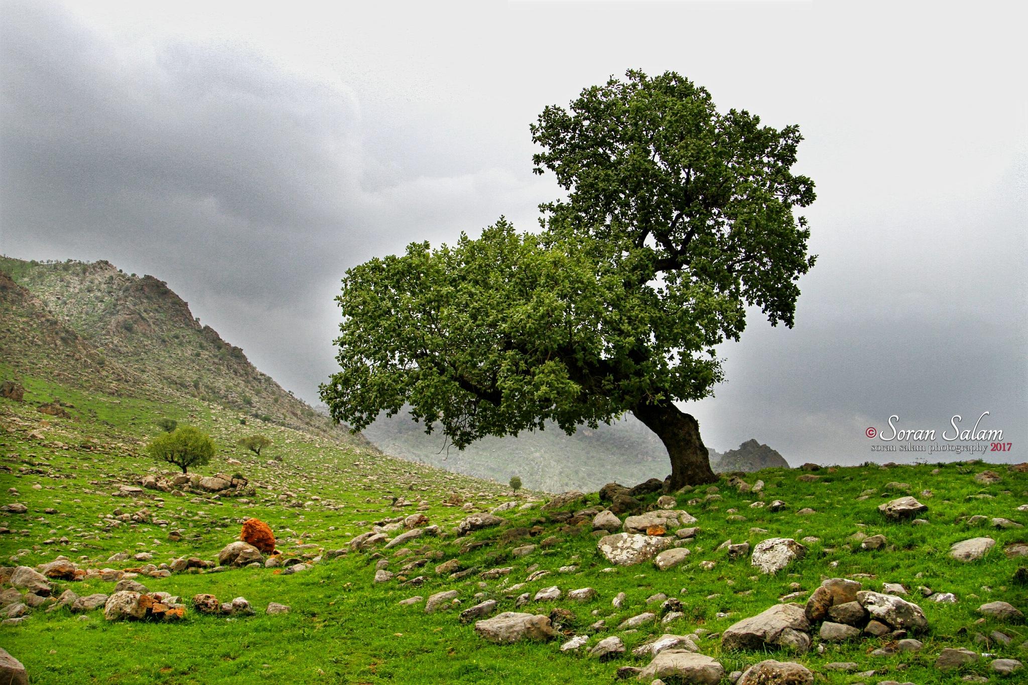 kurdistan nature by Soran Salam .. photography
