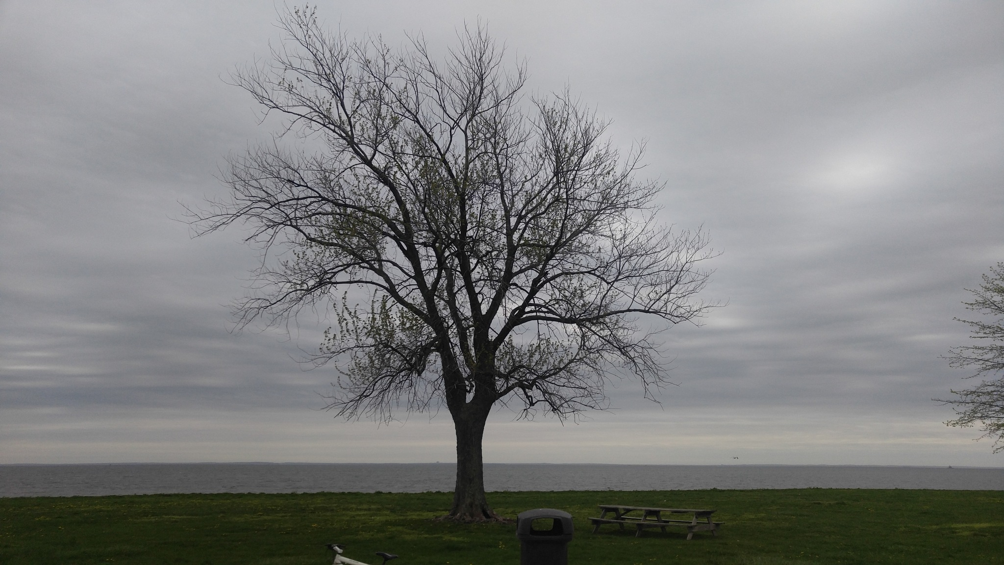the tree by Dr Dr