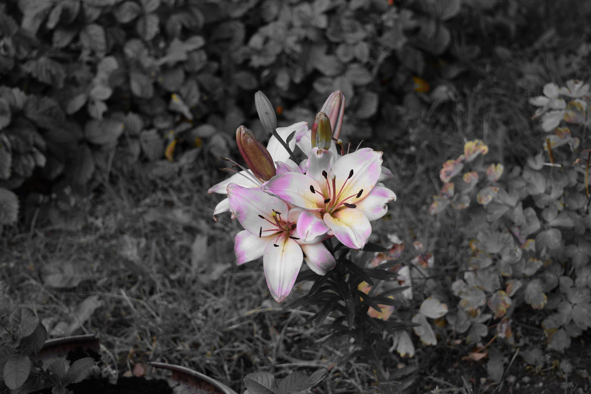 Flower by mmuchamaster