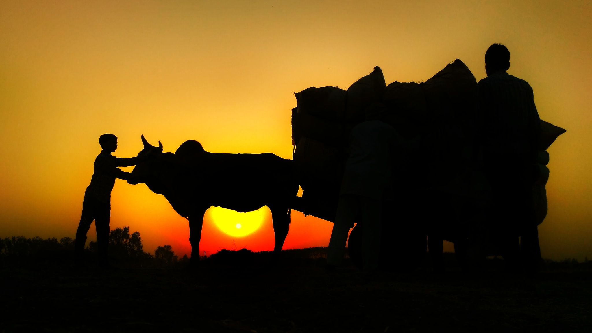 Sunset behind the Bullcart by Deep Dhull