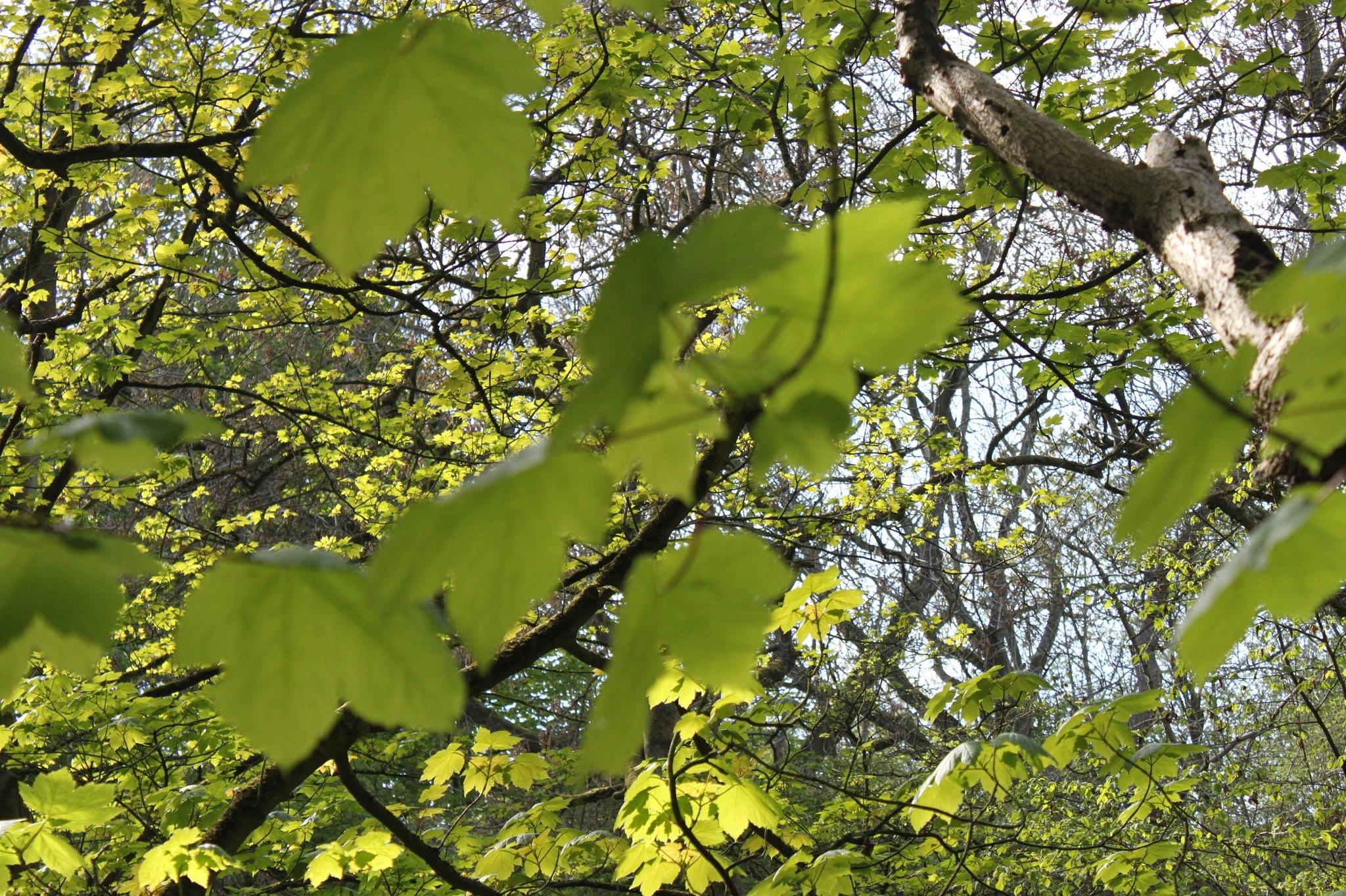 leaves by jadie_x2