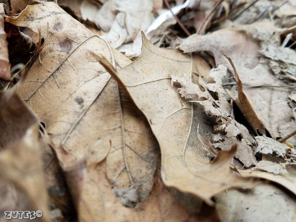 Leaves by Zutes Photography
