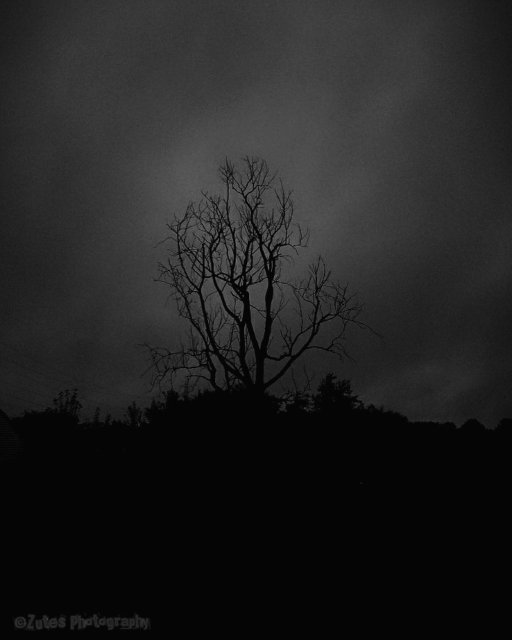 Lonely Tree by Zutes Photography