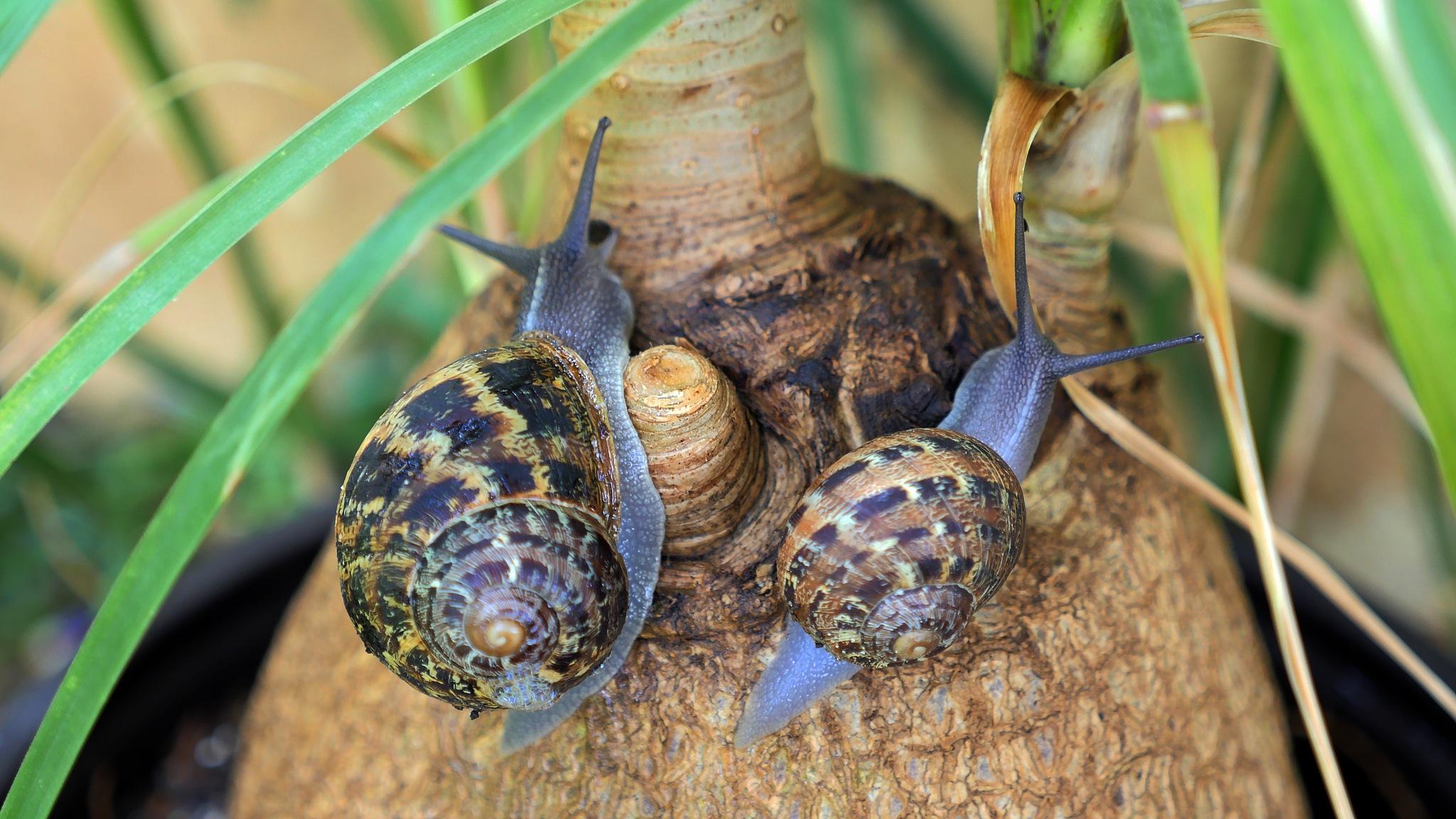 Snails by Moshe Harosh