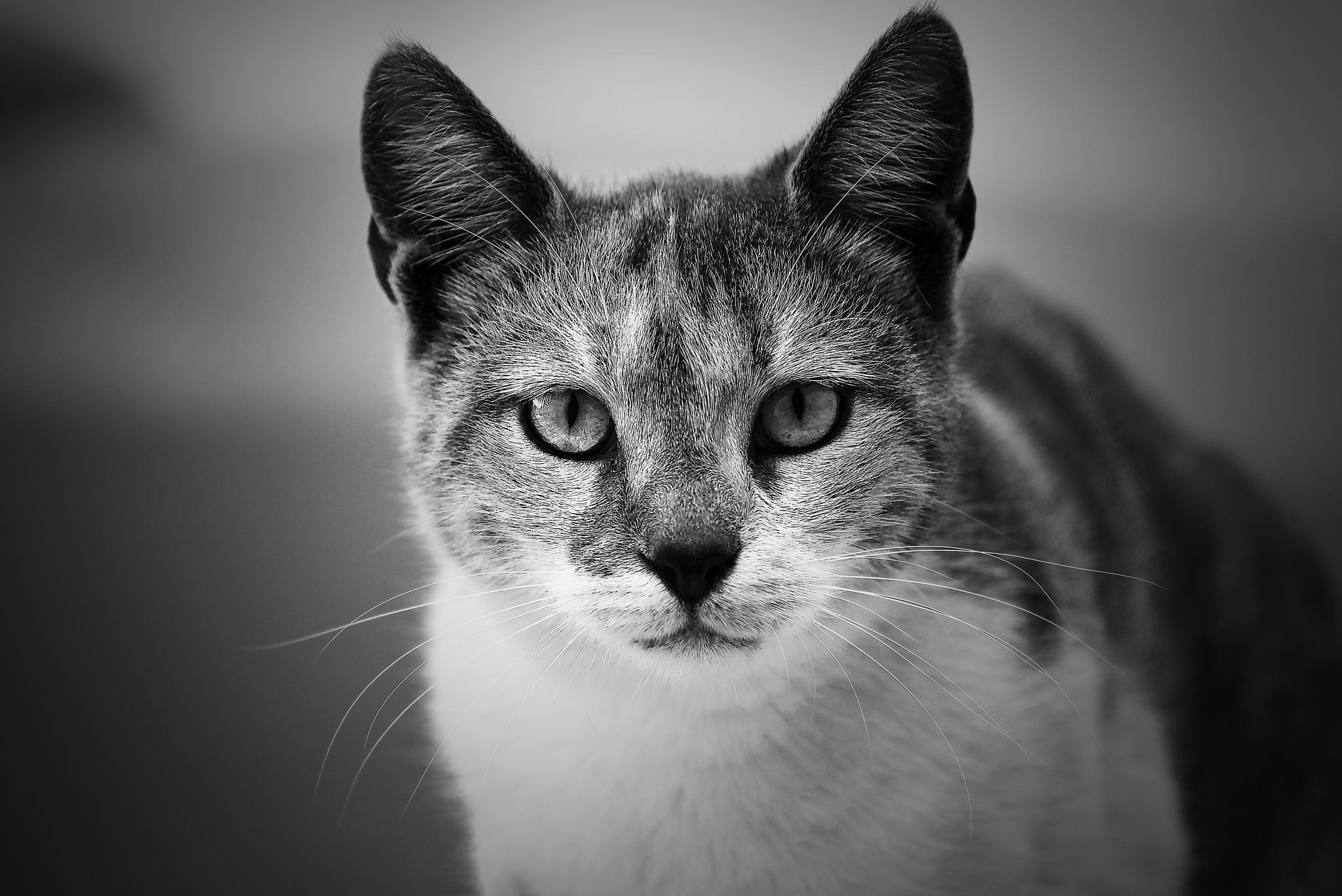 Cat in B&W by Moshe Harosh