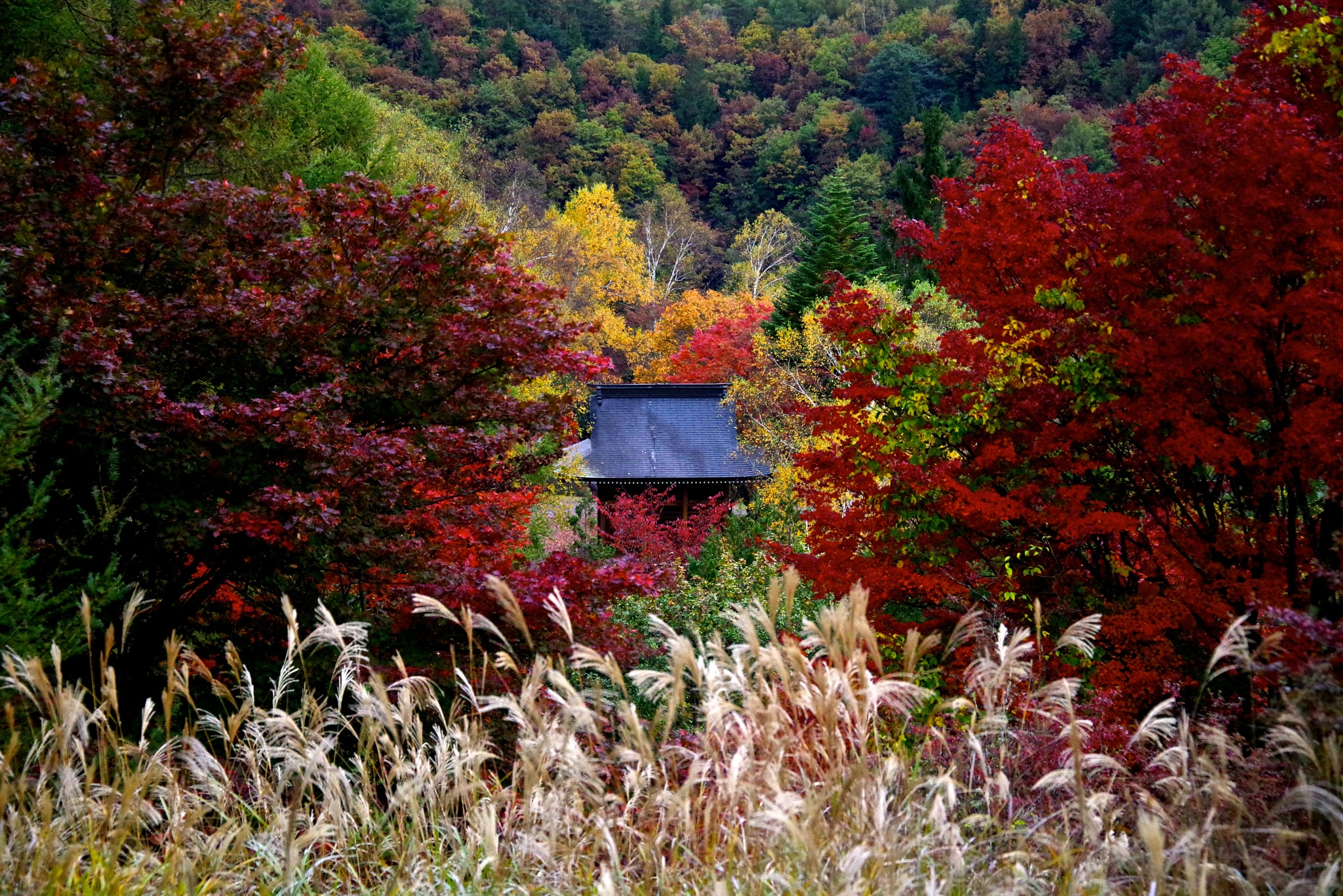 Kannon in Autumn by 一日写真一枚