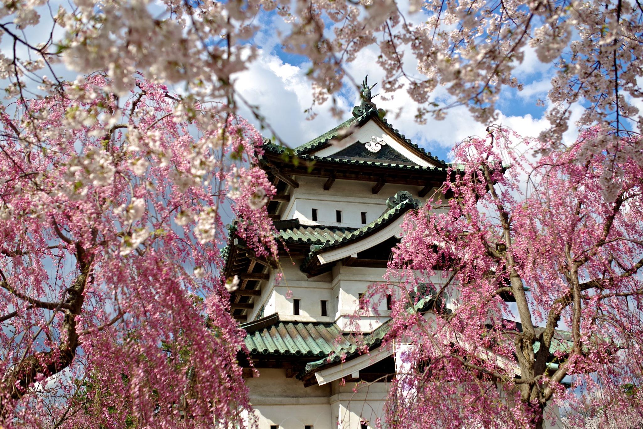 Hirosaki Castle by 一日写真一枚