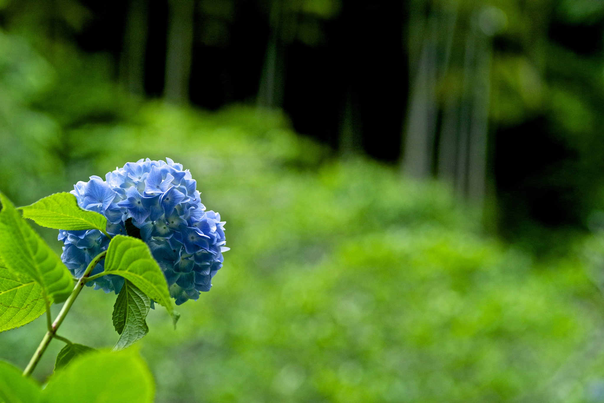The Blue by 一日写真一枚