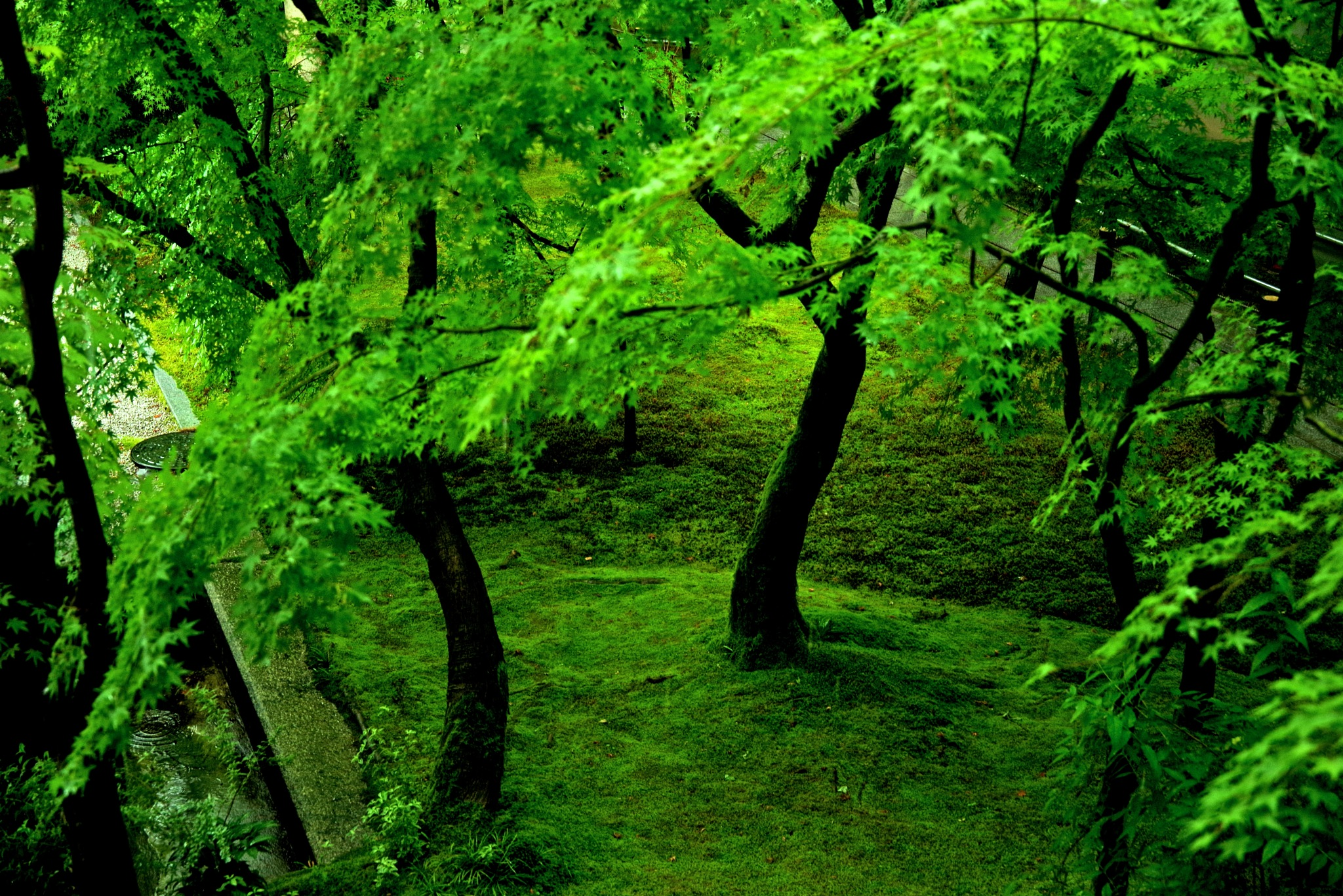 Moss Green by 一日写真一枚