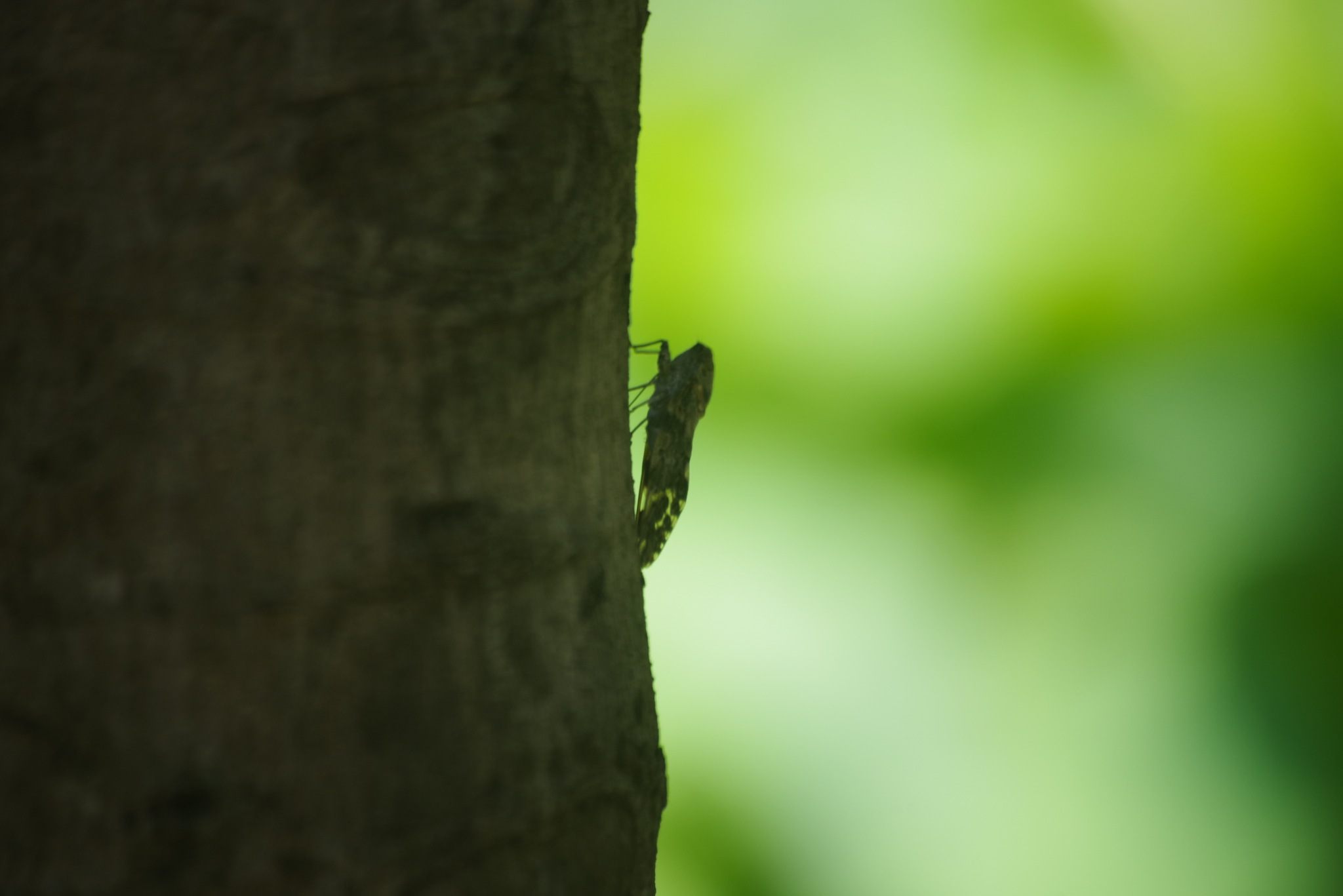 a cicada by 一日写真一枚