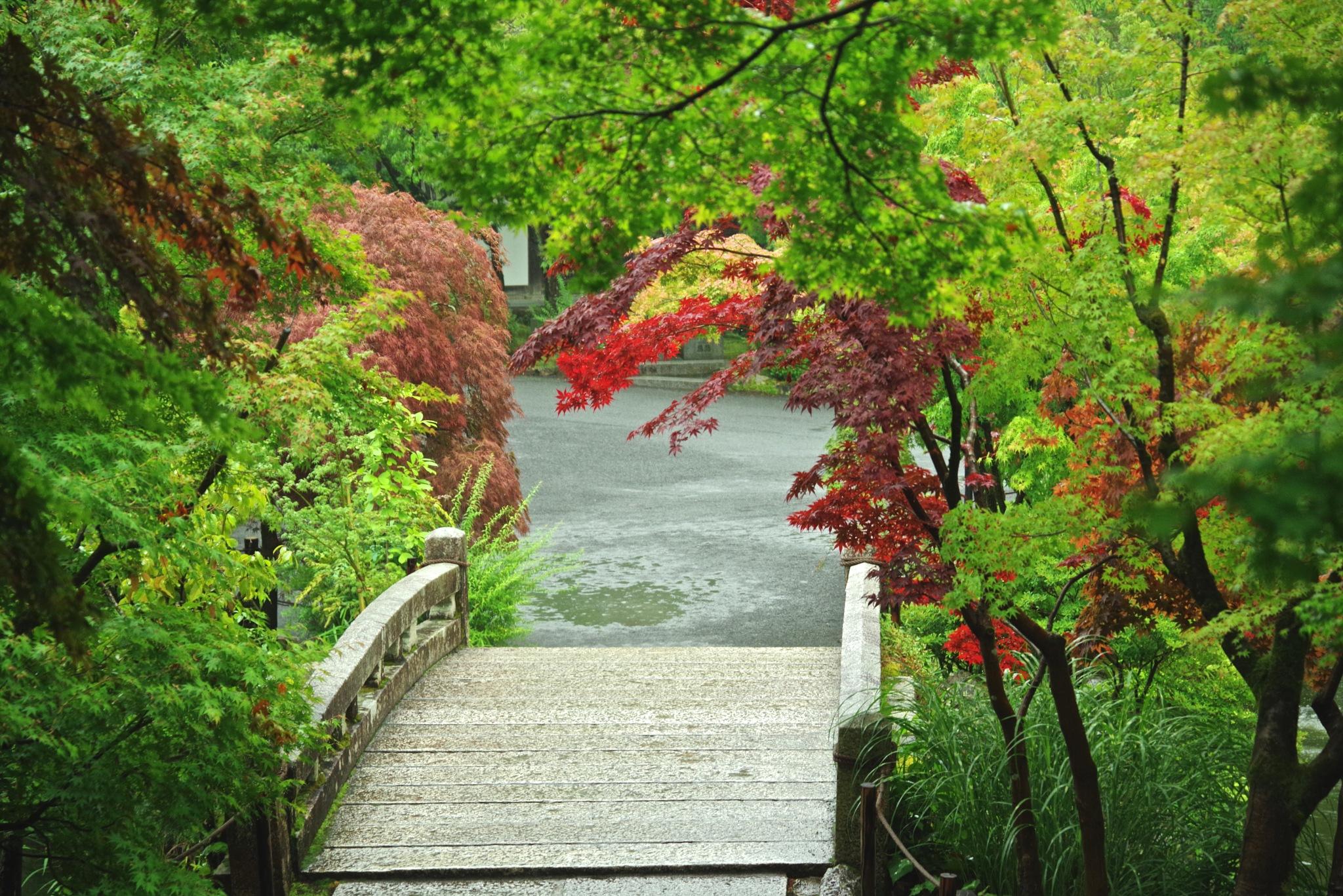 Rainy day bridge by 一日写真一枚