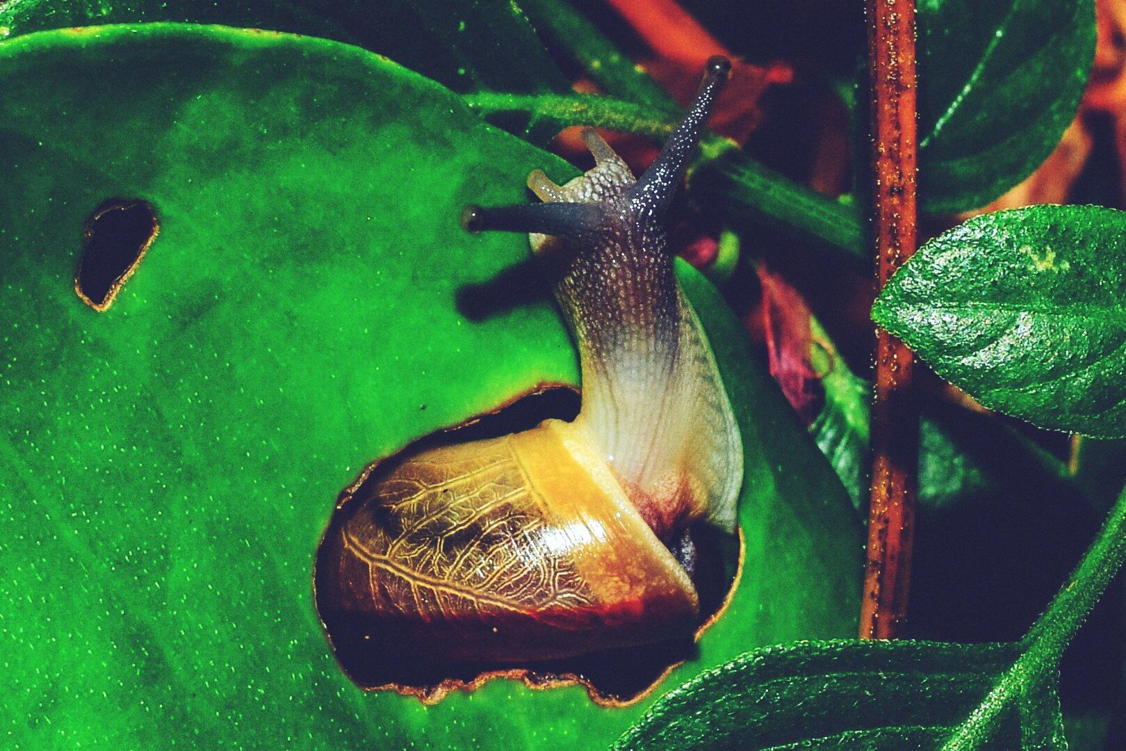 Untitled by Pichit Sucharoen