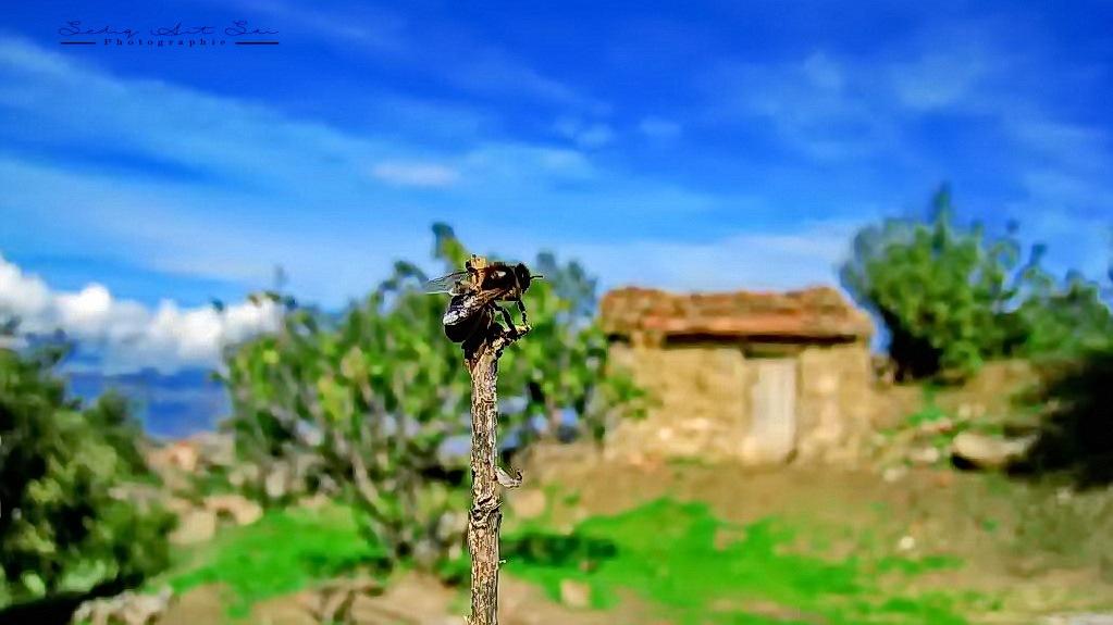 Untitled by Seddik Ait Sai