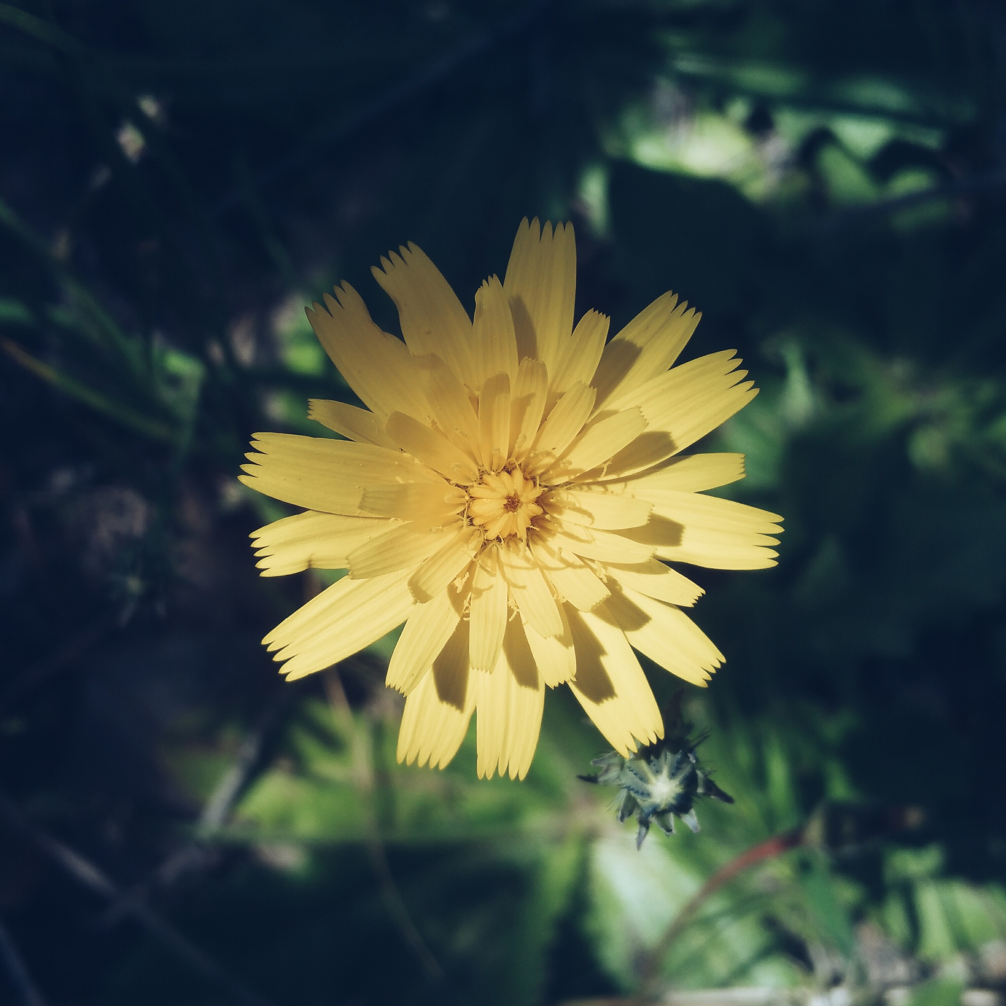 Flower  by Ayoub Elhab