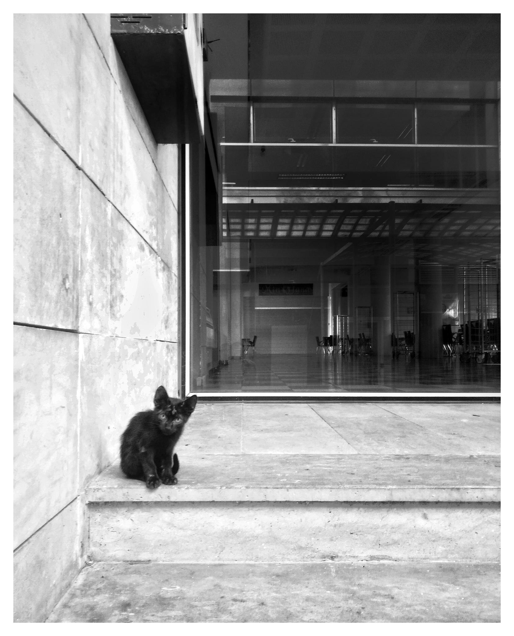 little cat by aminebensaada