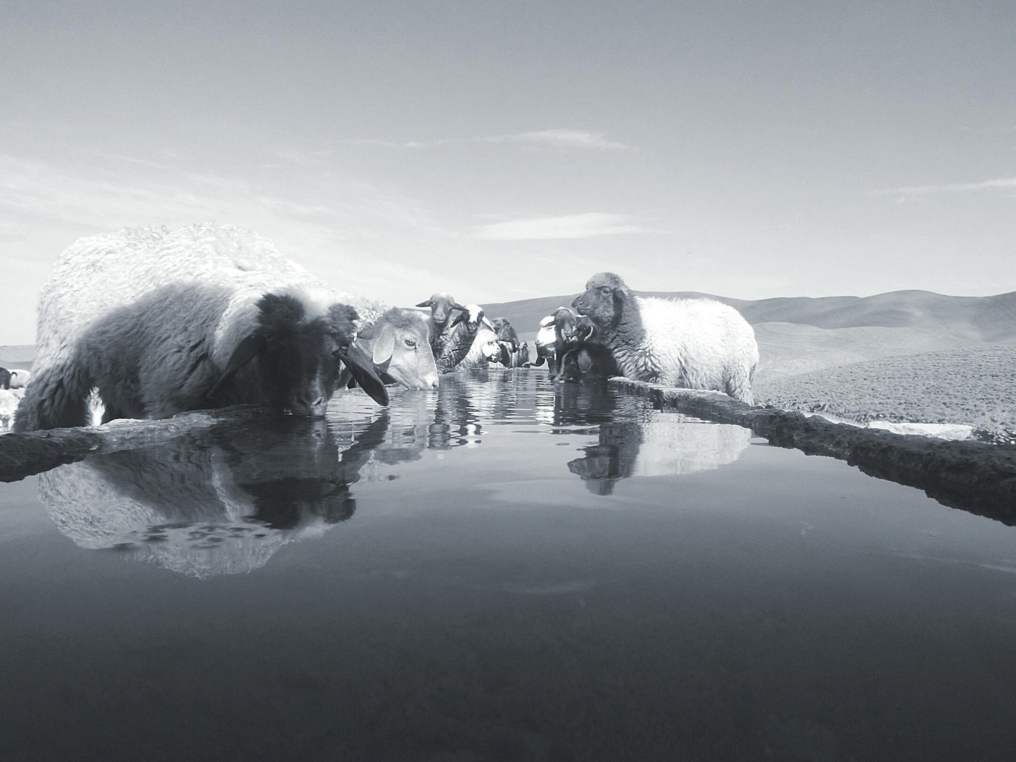 Sheep and stream by REDWANCHITAM