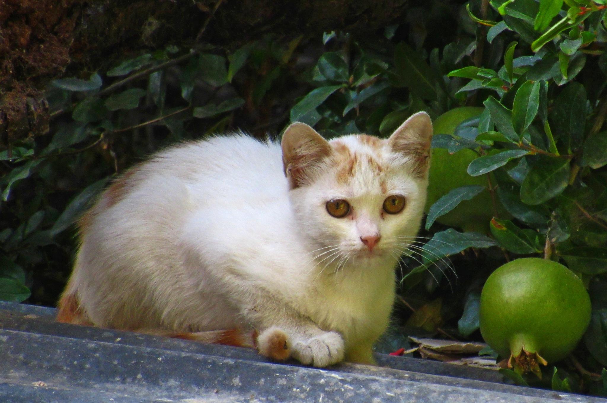 BABY CAT  by Basel H Daneel