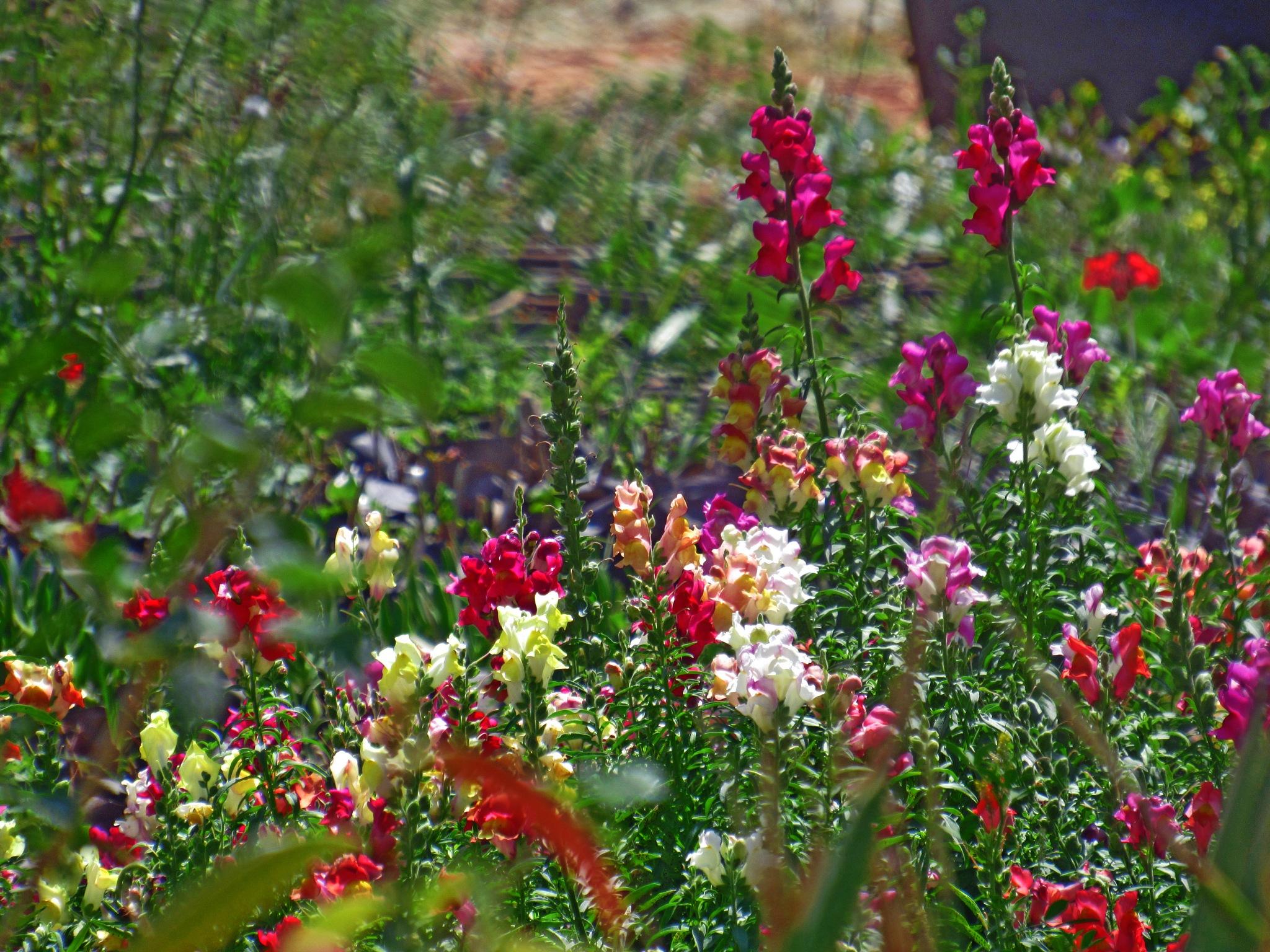 SPRING  FLOWERS  by Basel H Daneel