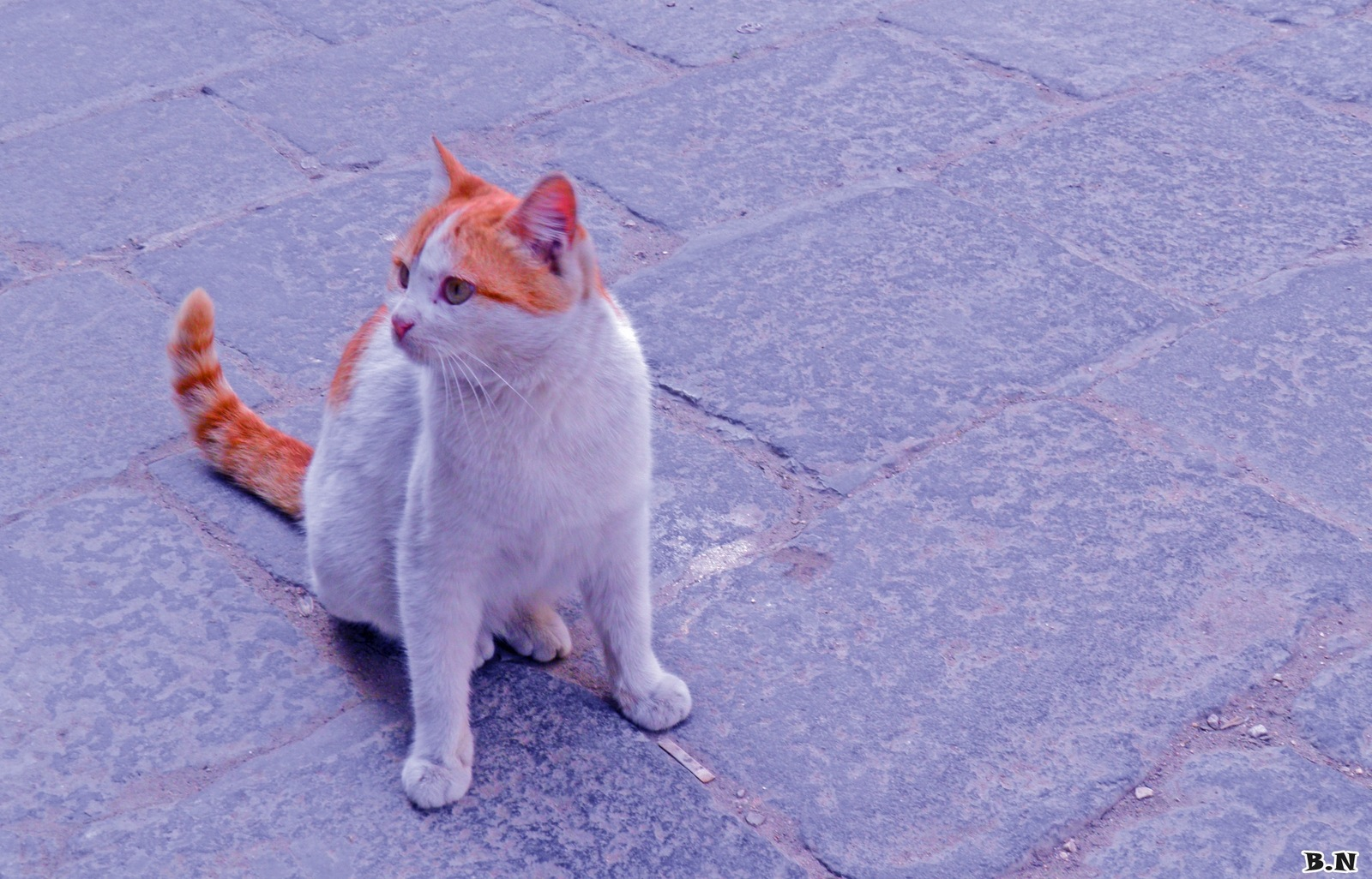 CUTE CAT  by Basel H Daneel