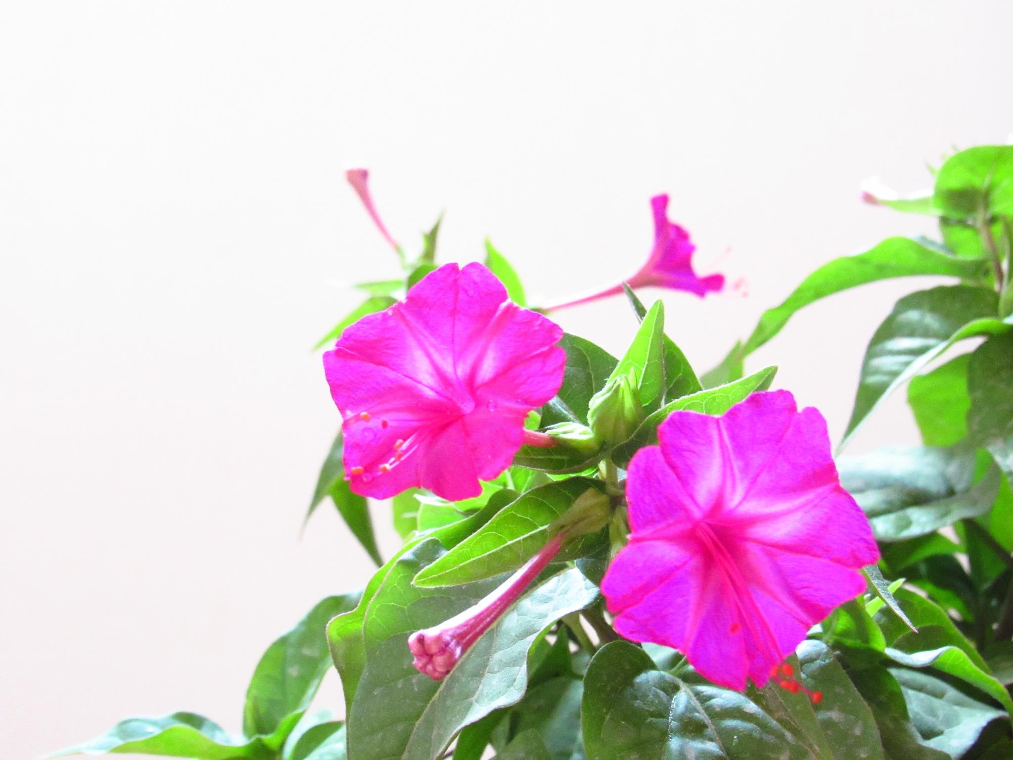 FLOWERS by Basel H Daneel