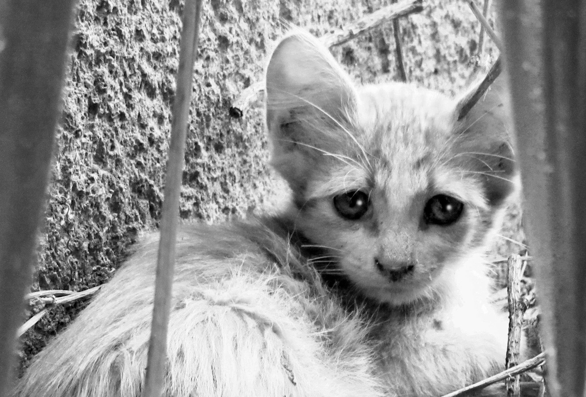 POOR BABY CAT  by Basel H Daneel