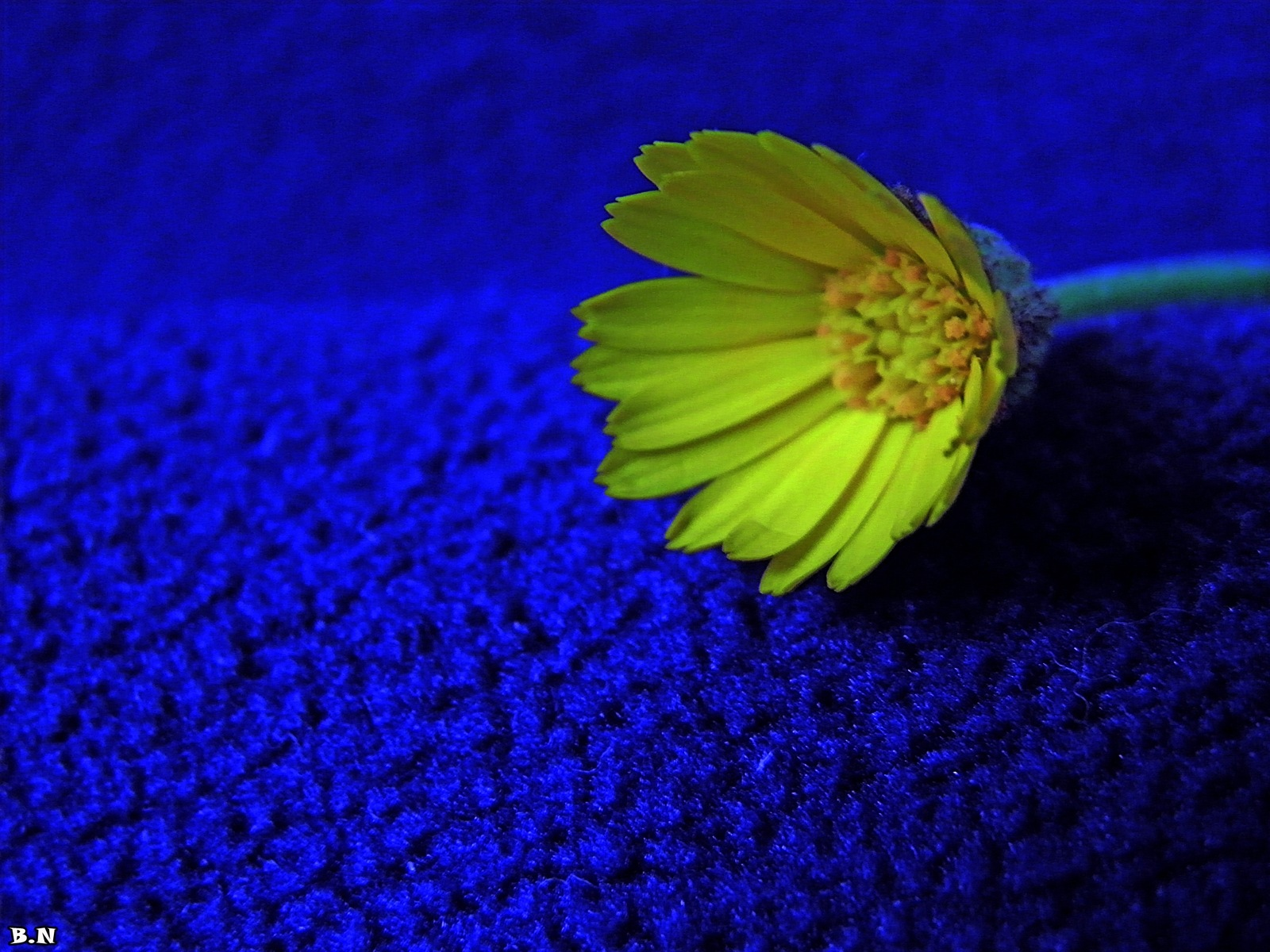 FLOWER  by Basel H Daneel