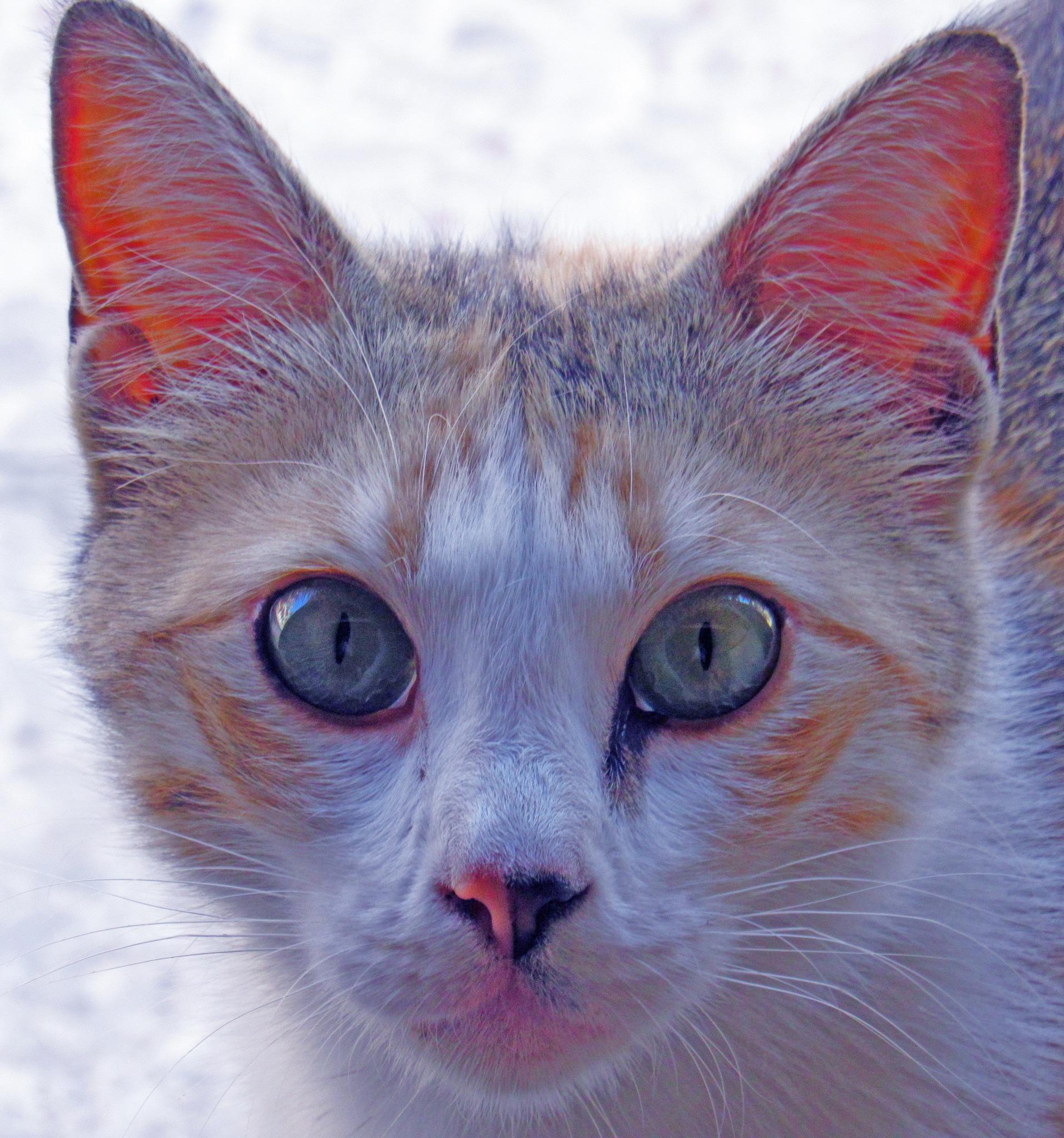 CAT by Basel H Daneel