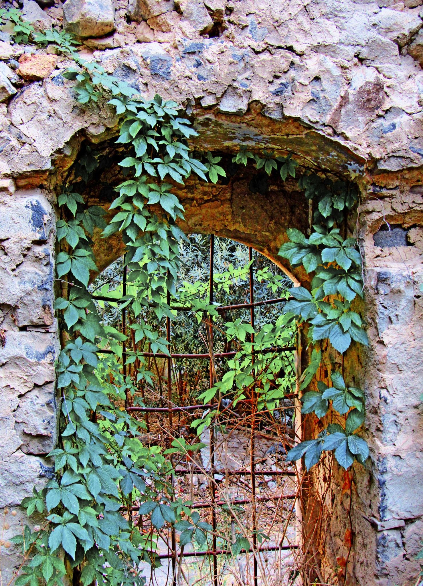 WINDOW  by Basel H Daneel