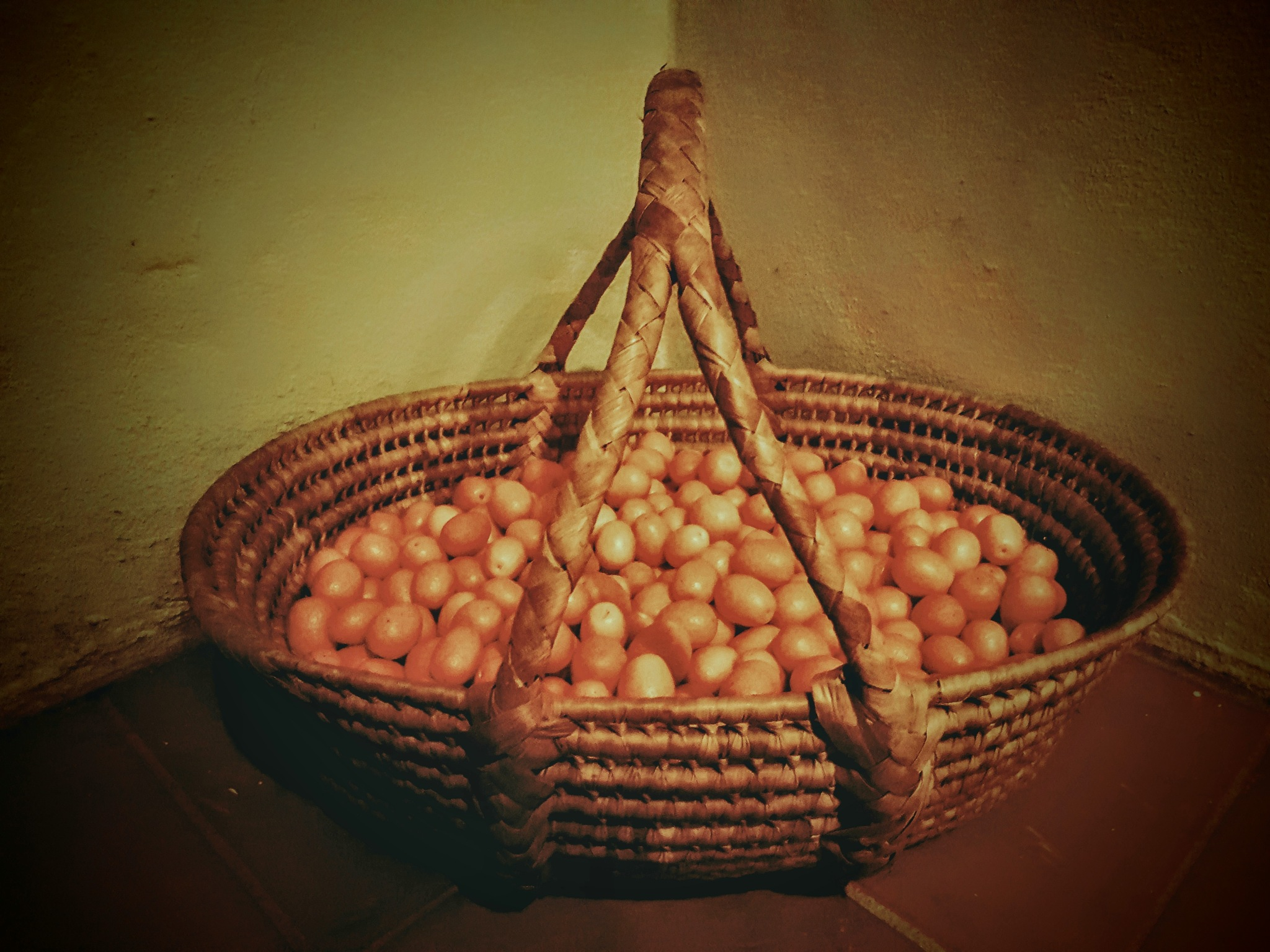 Cumquats picked ready to make jam by Amanda Savage
