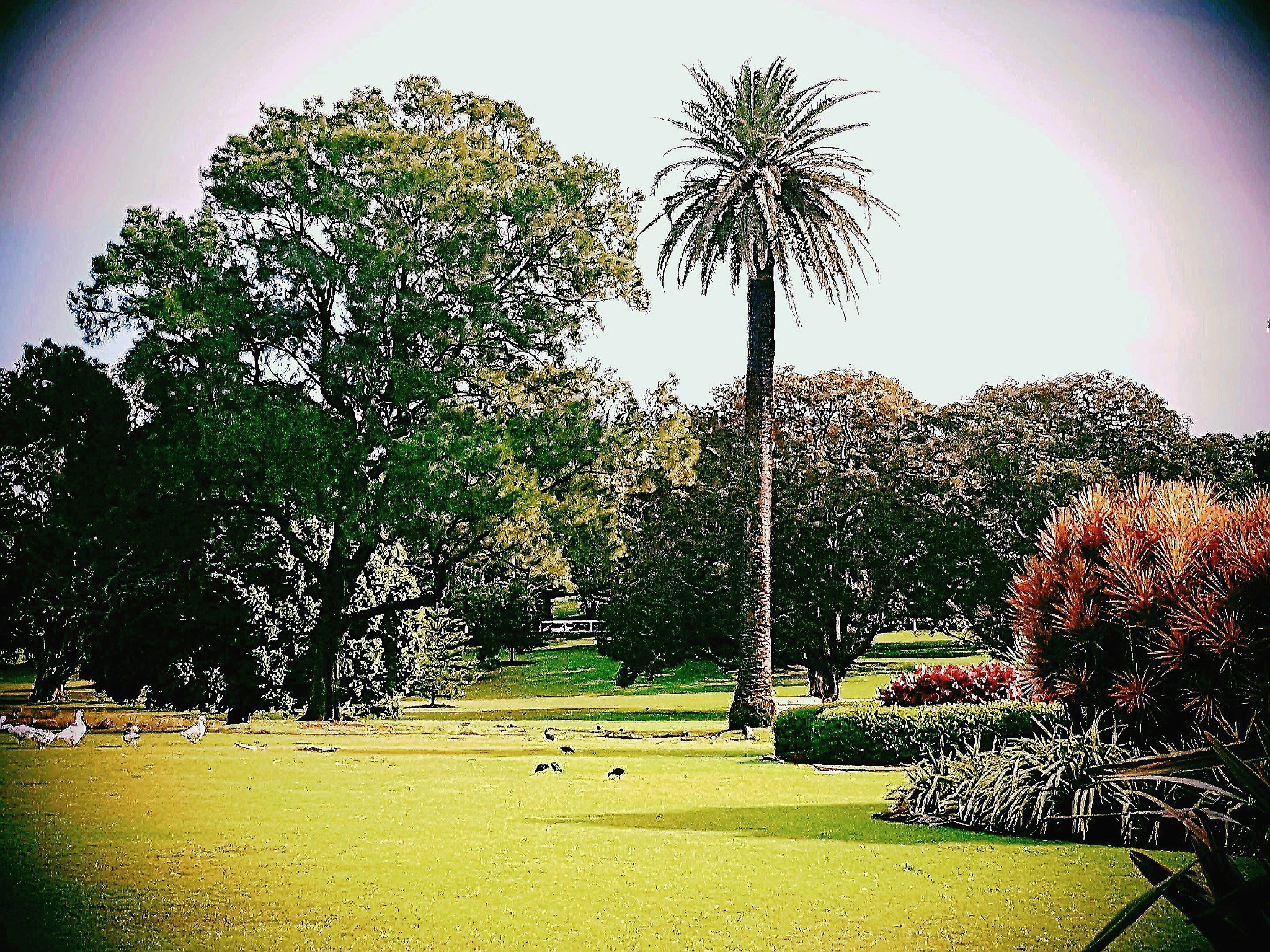 Centennial Parklands Sydney by Amanda Savage