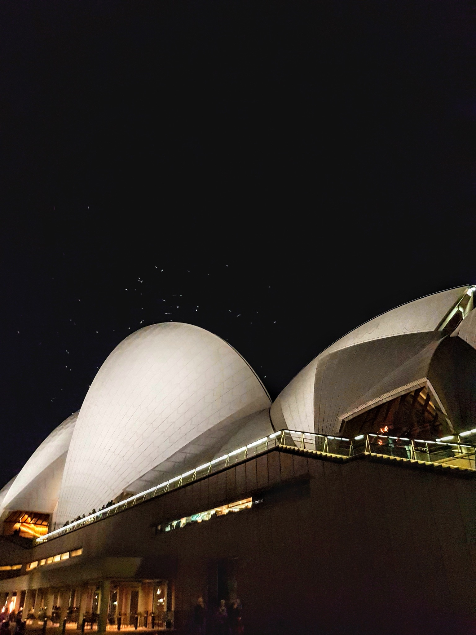Sydney Opera House with seagulls attracted to the light by Amanda Savage
