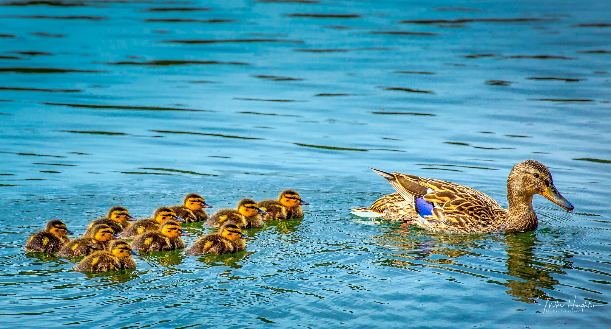 Swimming Lessons. by BlueMax Photography