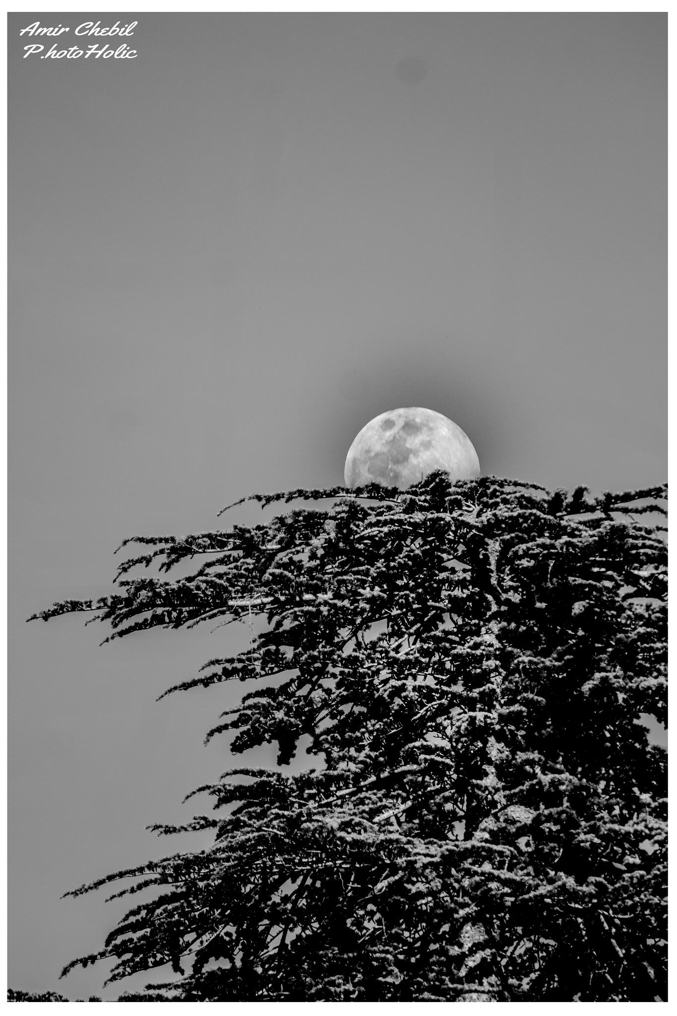 Sunrise of the Moon by El Prince Chebilo