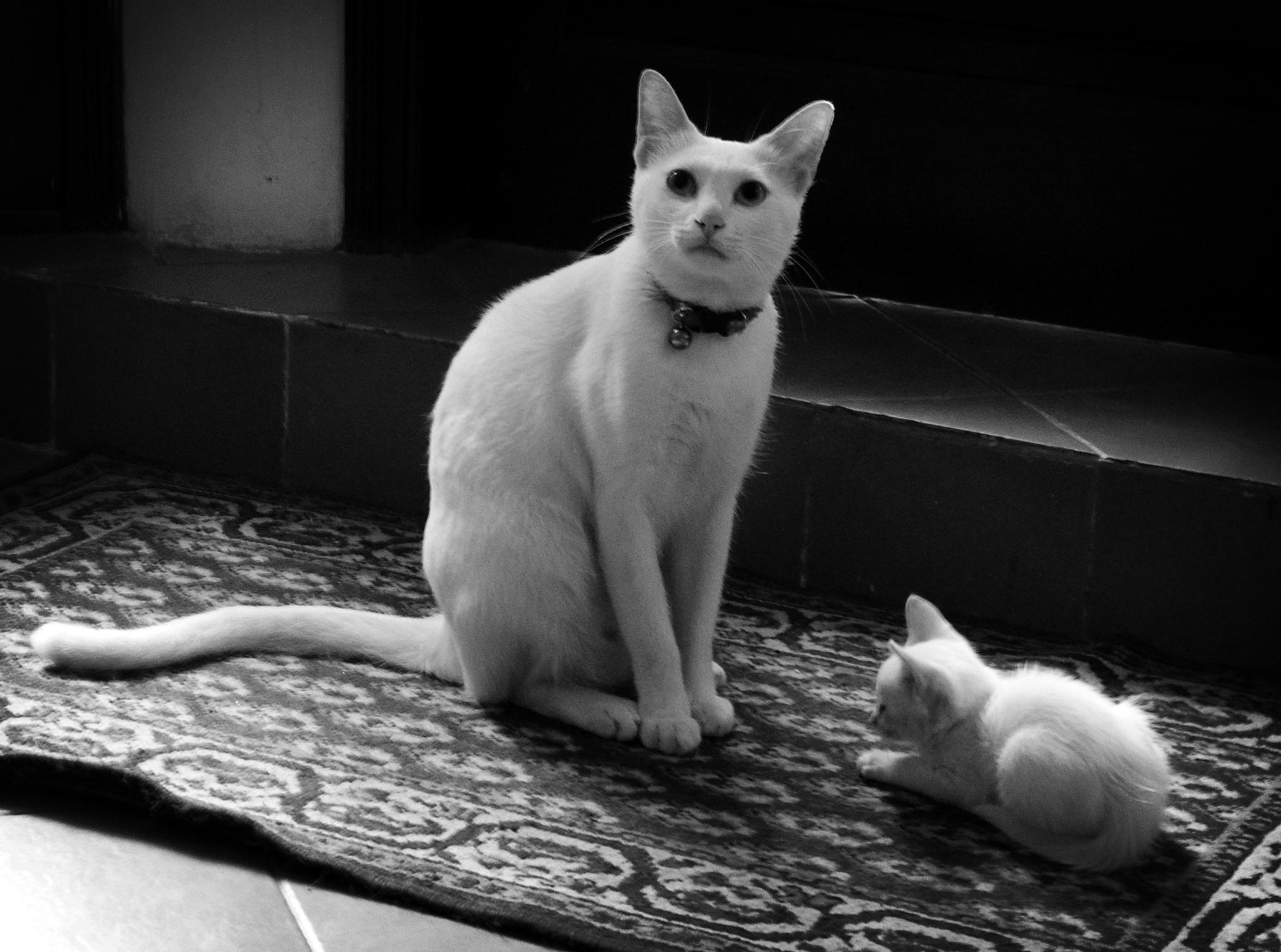 Photo in Street Photography #hanoi #vietnam #street #cats