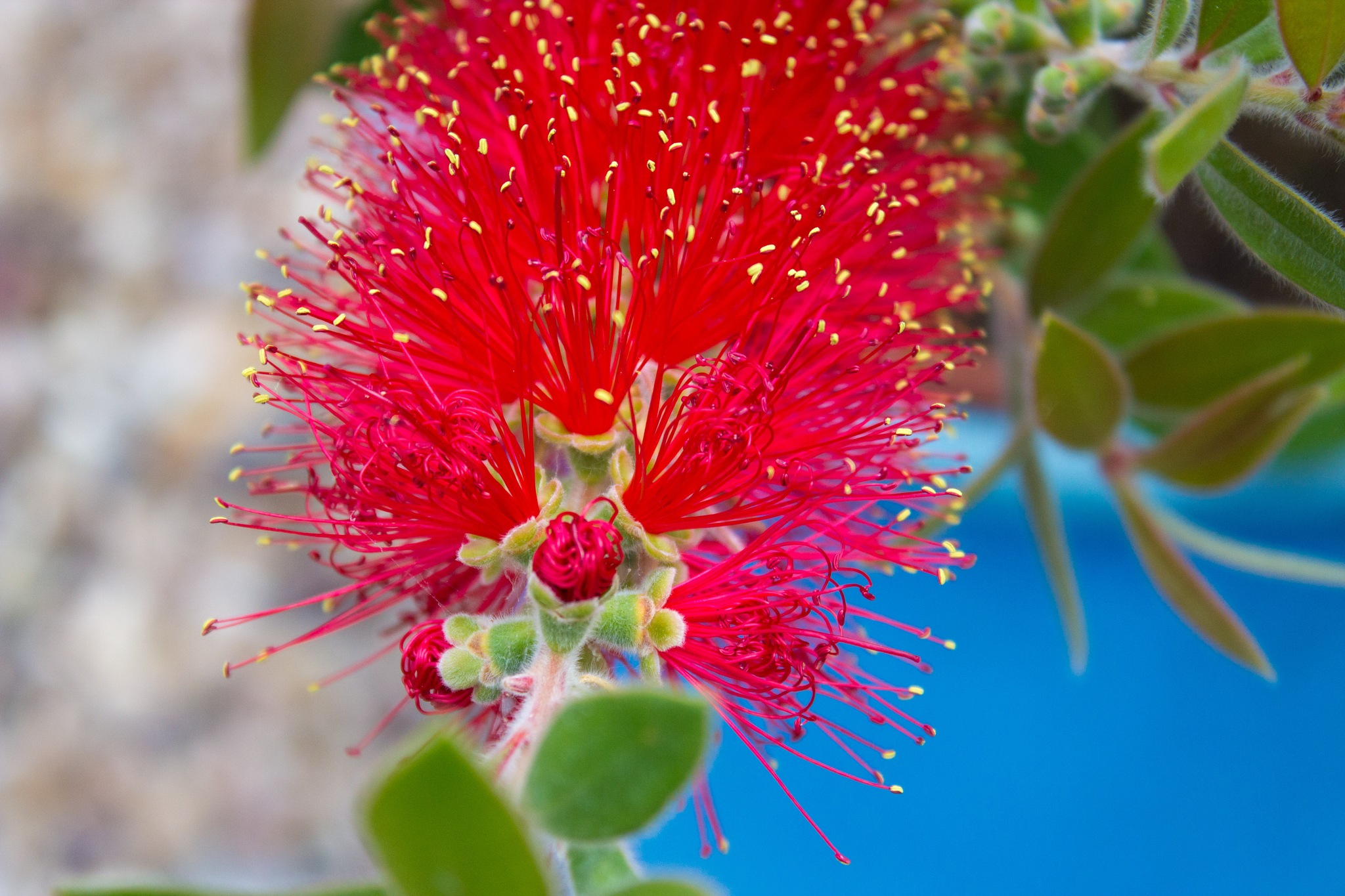 Red Spike by James M