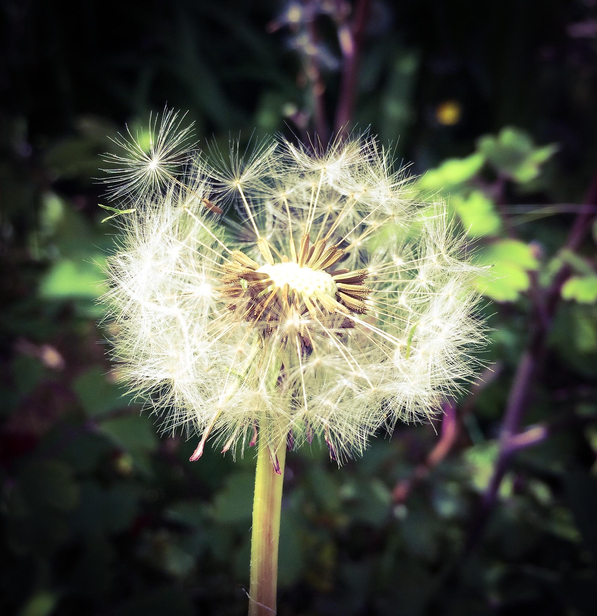 Make a wish by Kevin Ward