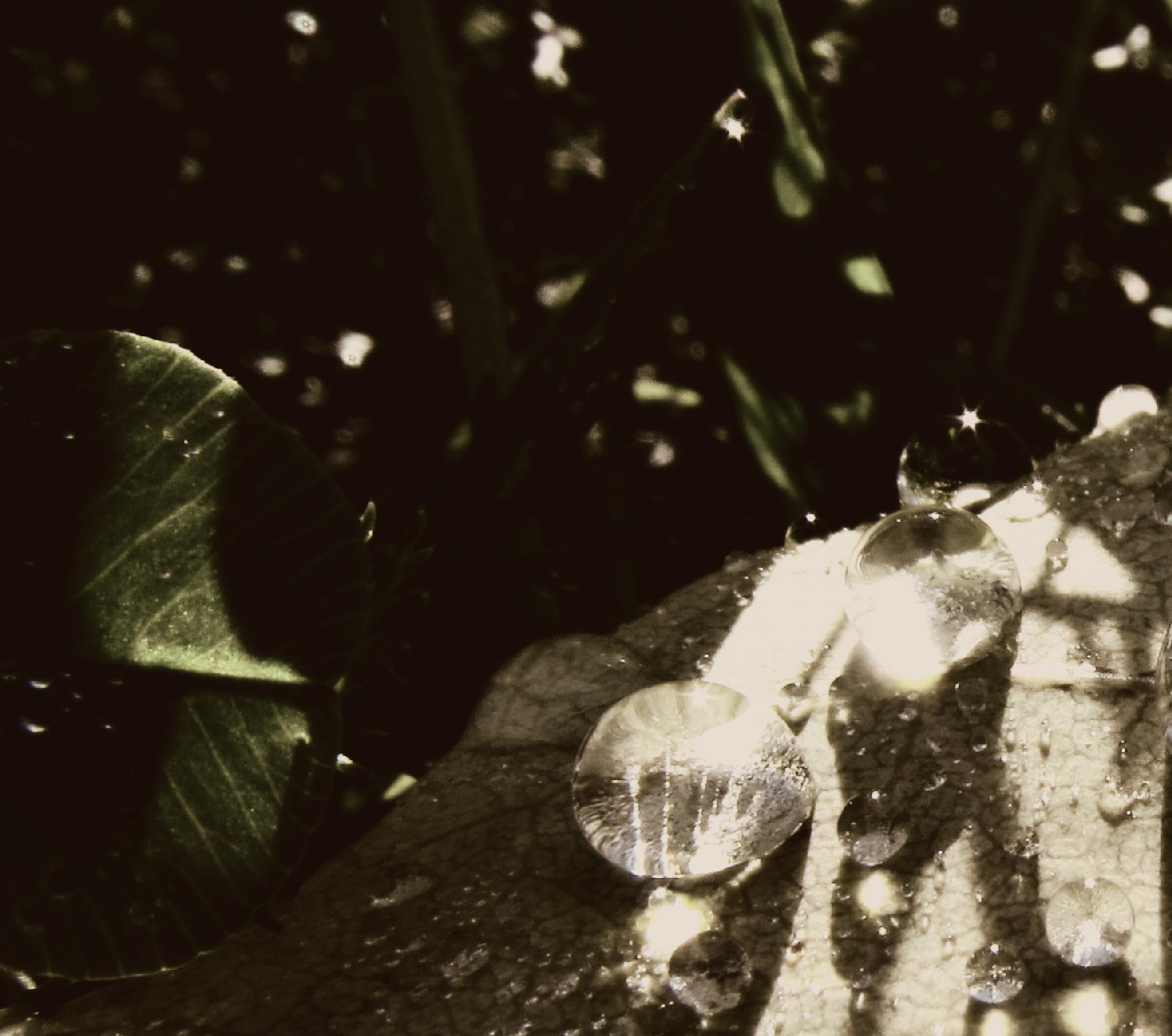 watersdrops by Dragan Dvorski