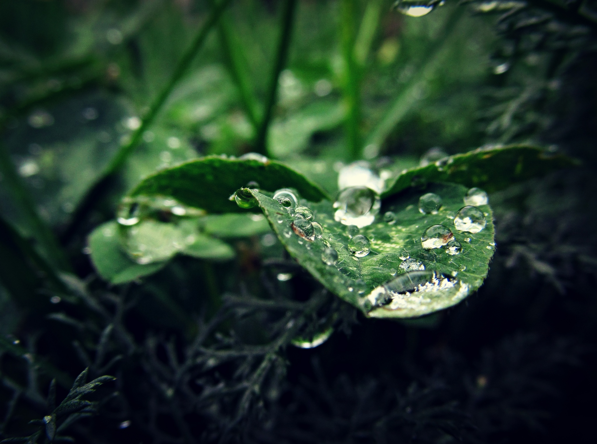 Magic of rain drops by Dragan Dvorski