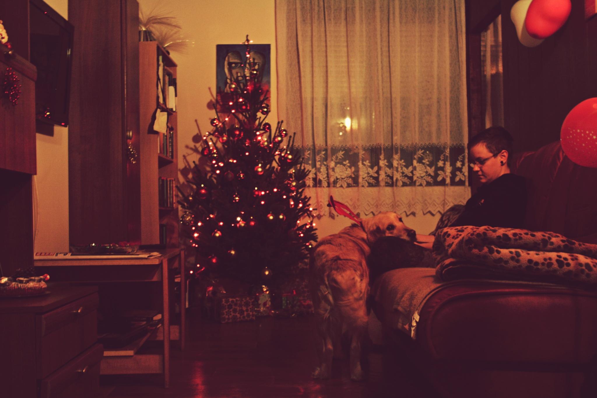 christmas is coming by Dragan Dvorski