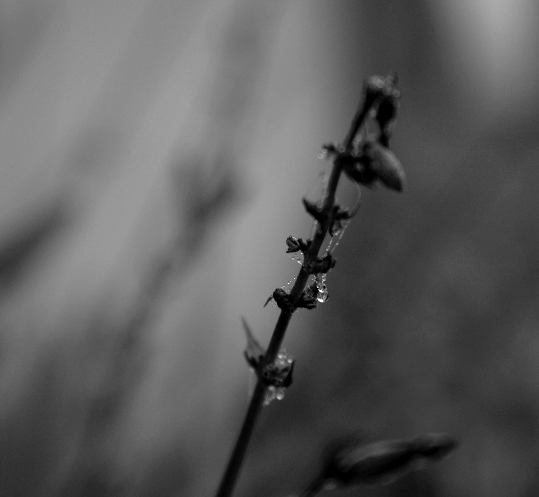 black macro by Dragan Dvorski