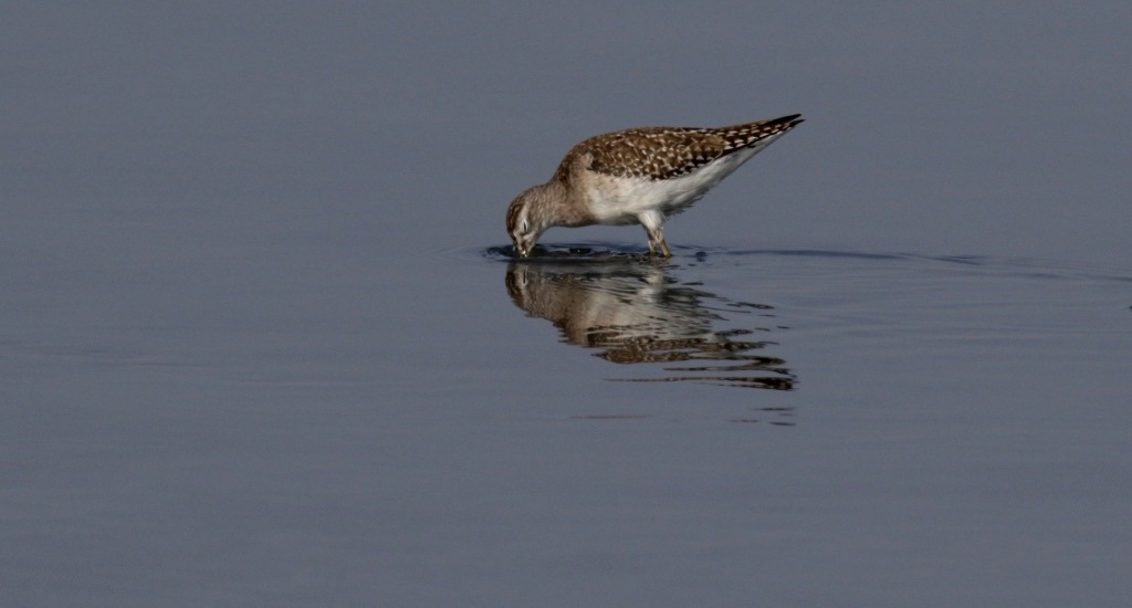 Look beneath the surface !! by Umesh Sharma