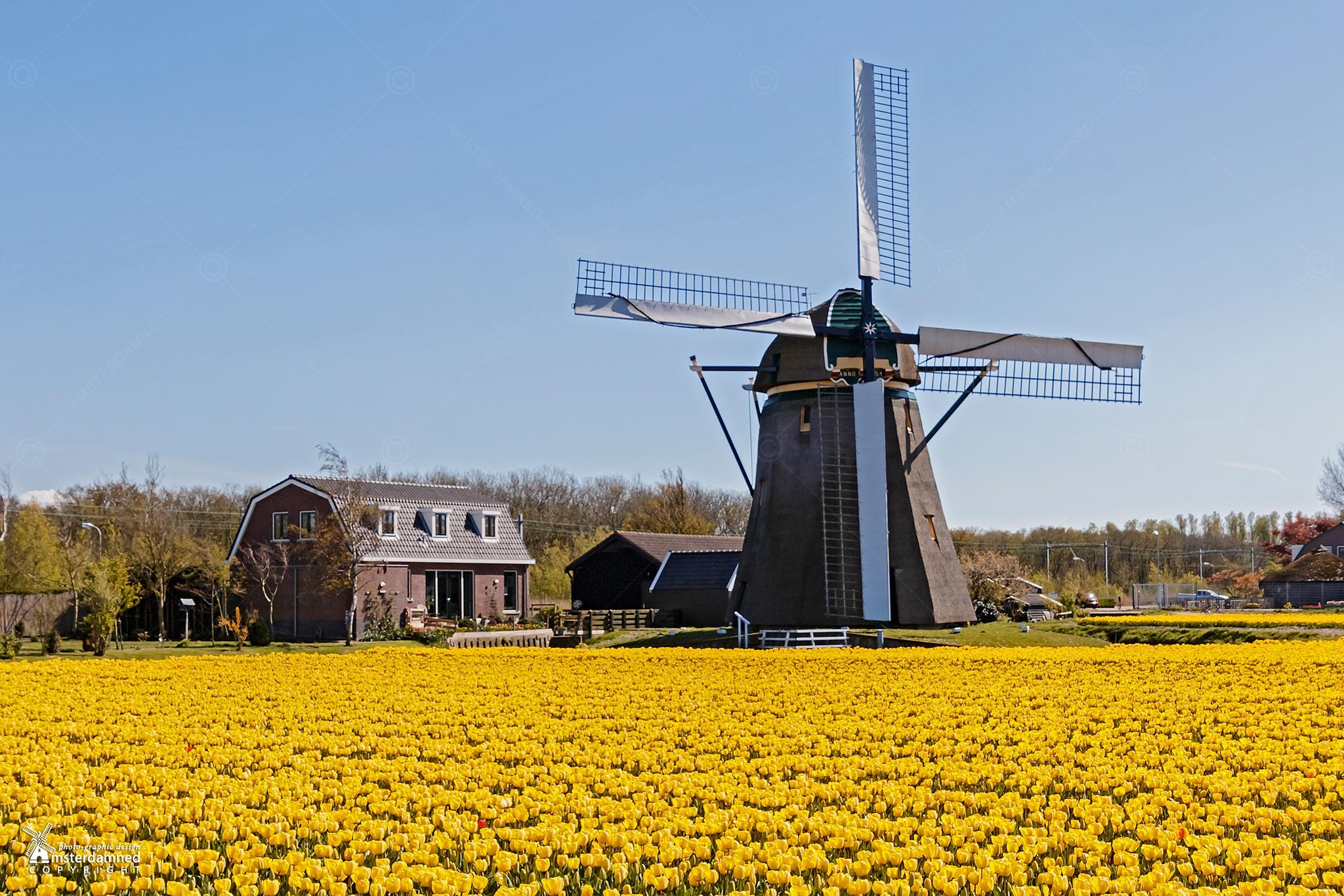 Noorwijkerhout, The Netherlands by Michael