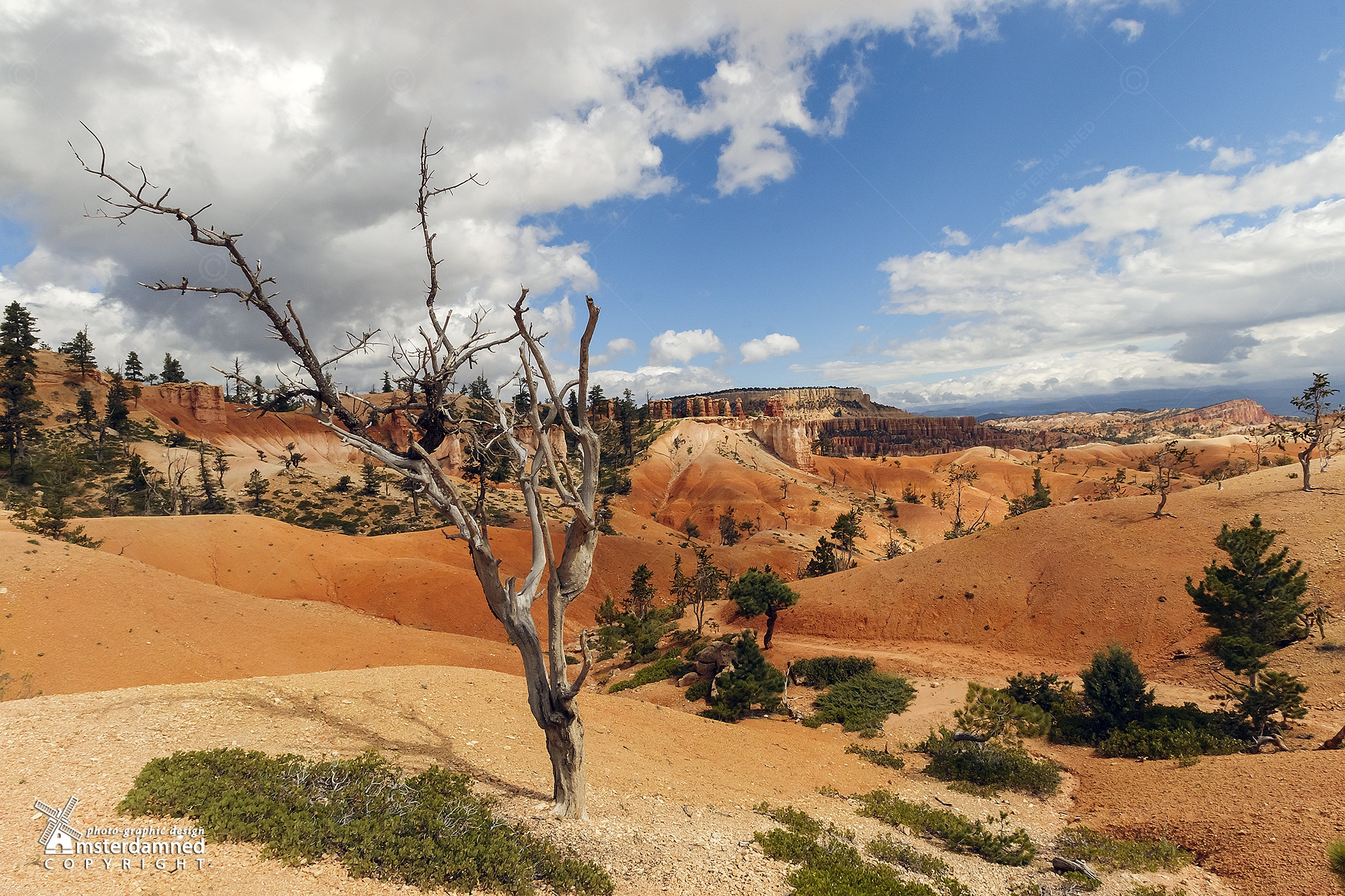 Bryce Canyon, United States by Michael