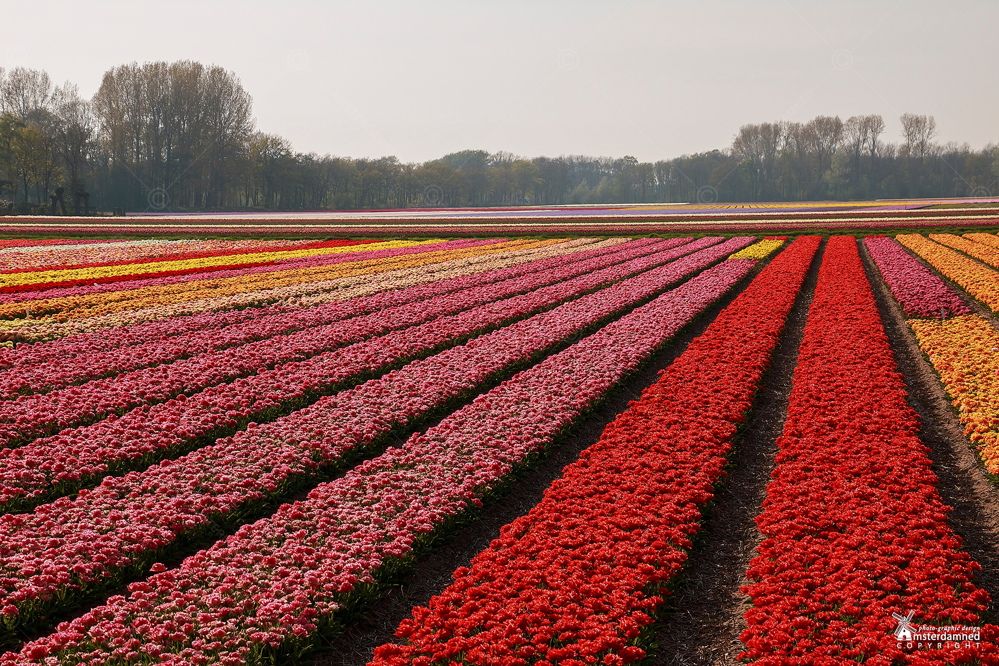 Lisse, Netherlands by Michael