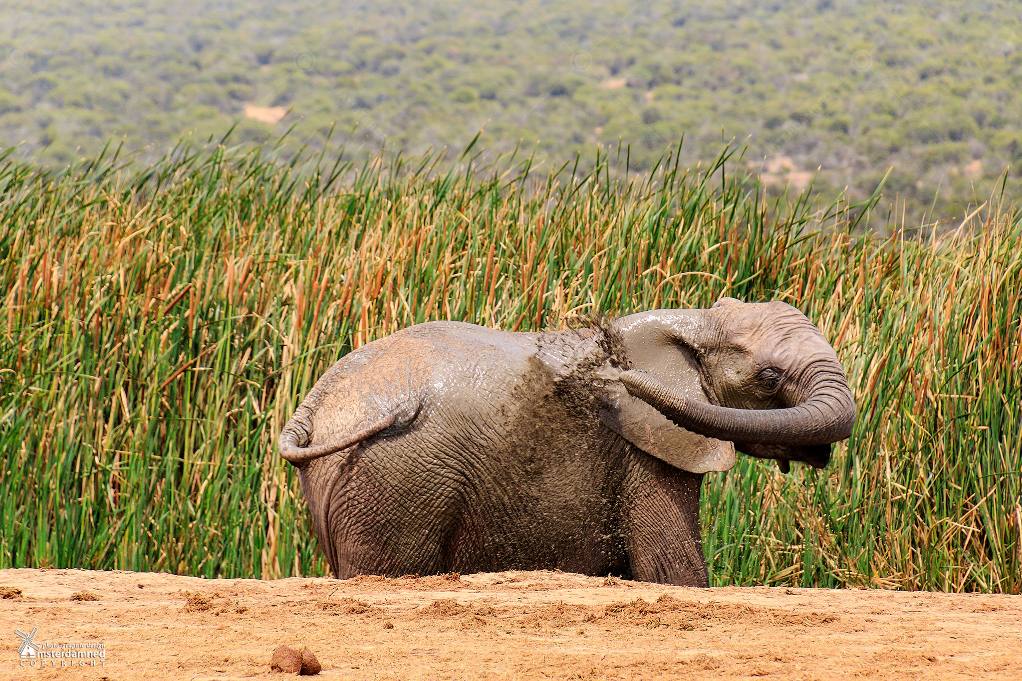 Addo, South Africa by Michael