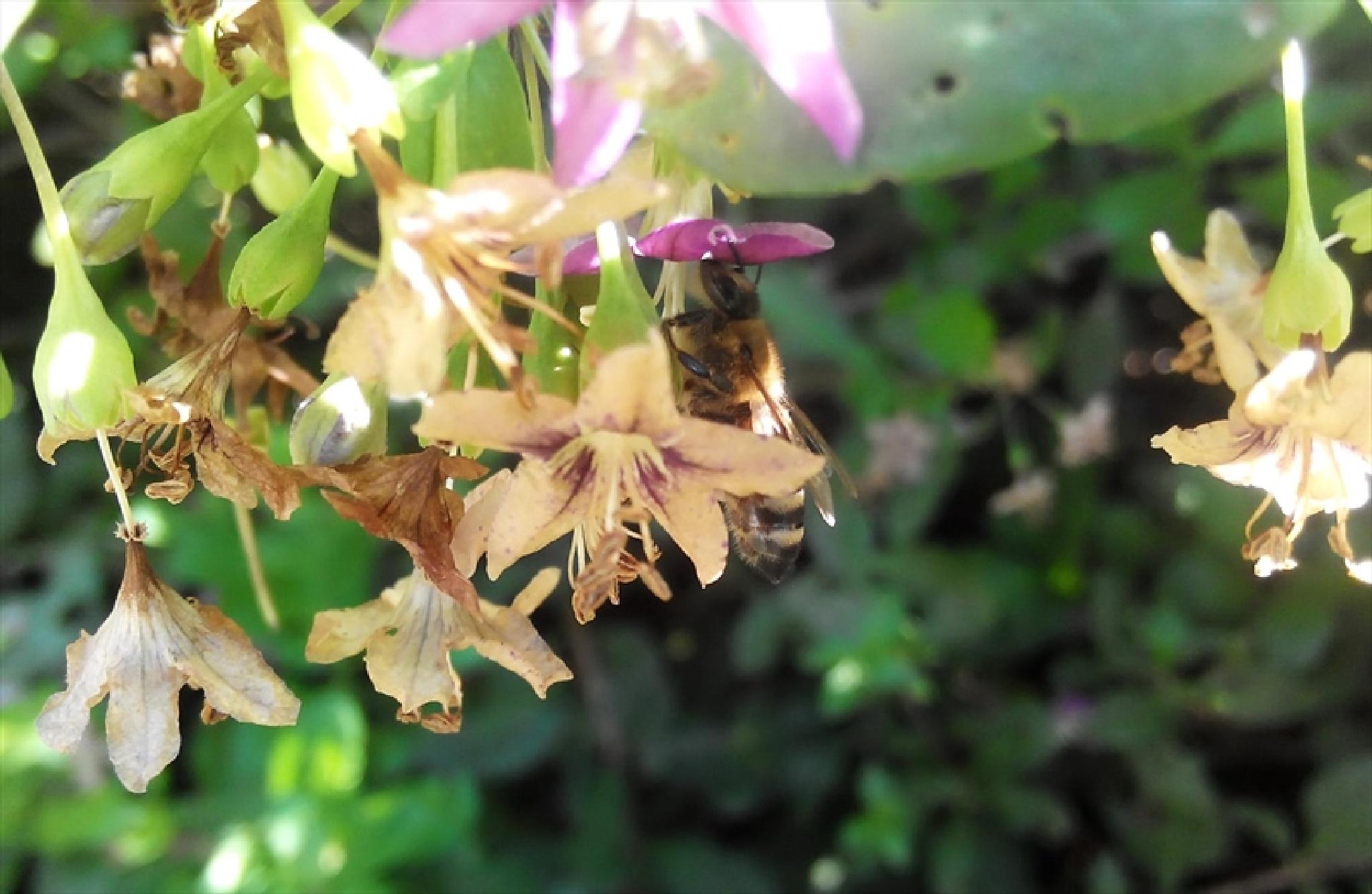 Working bee by ShumenBulgaria