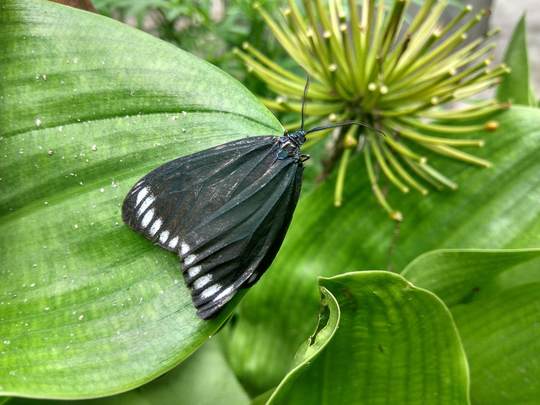 Butterfly by Kapildev Roy