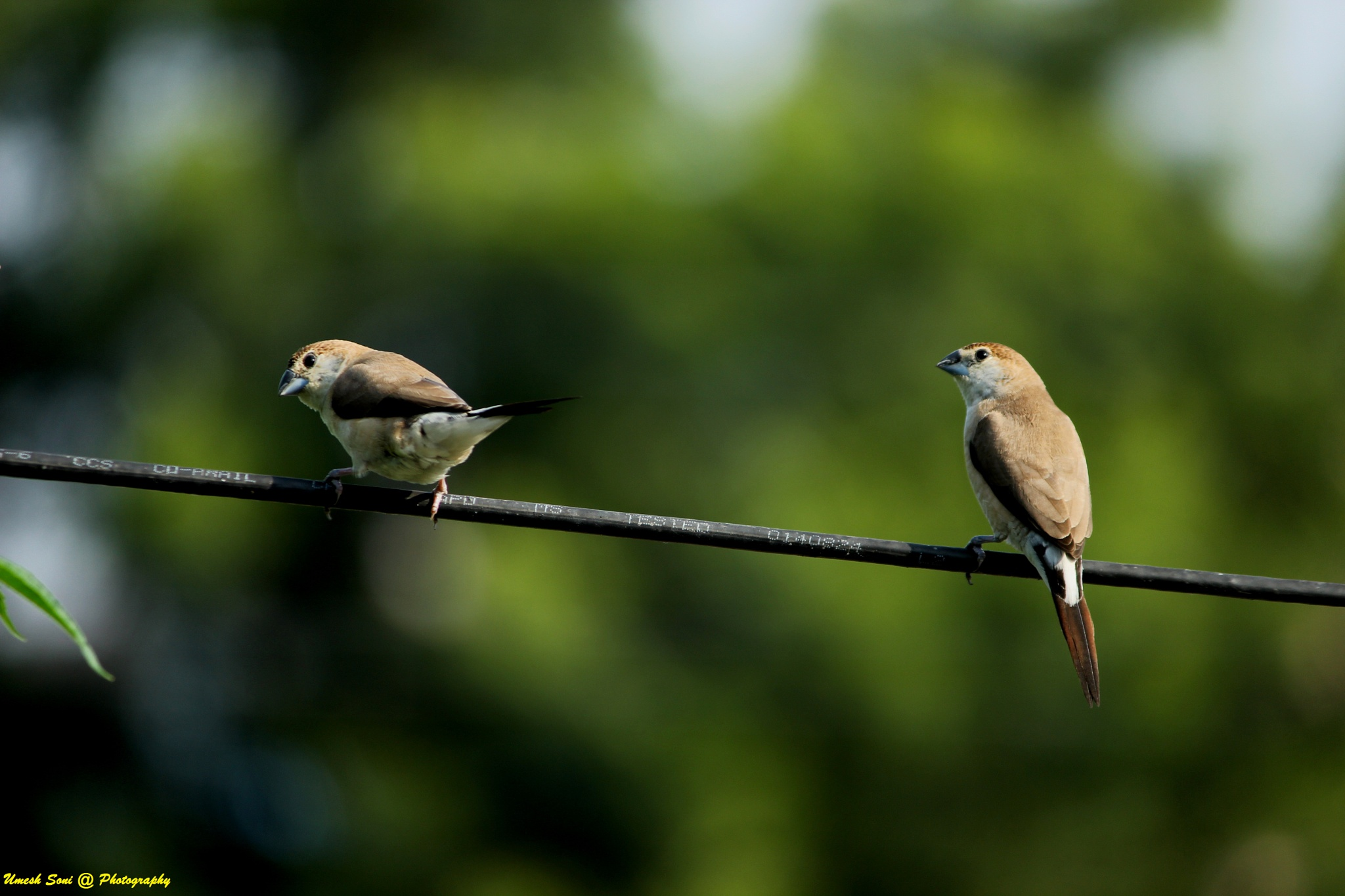 Untitled by Umesh Soni