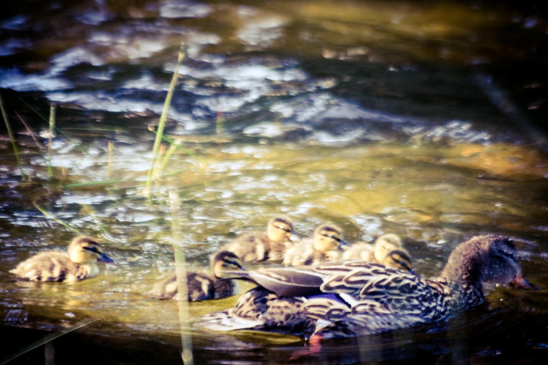 Family swim by Ted Fletcher