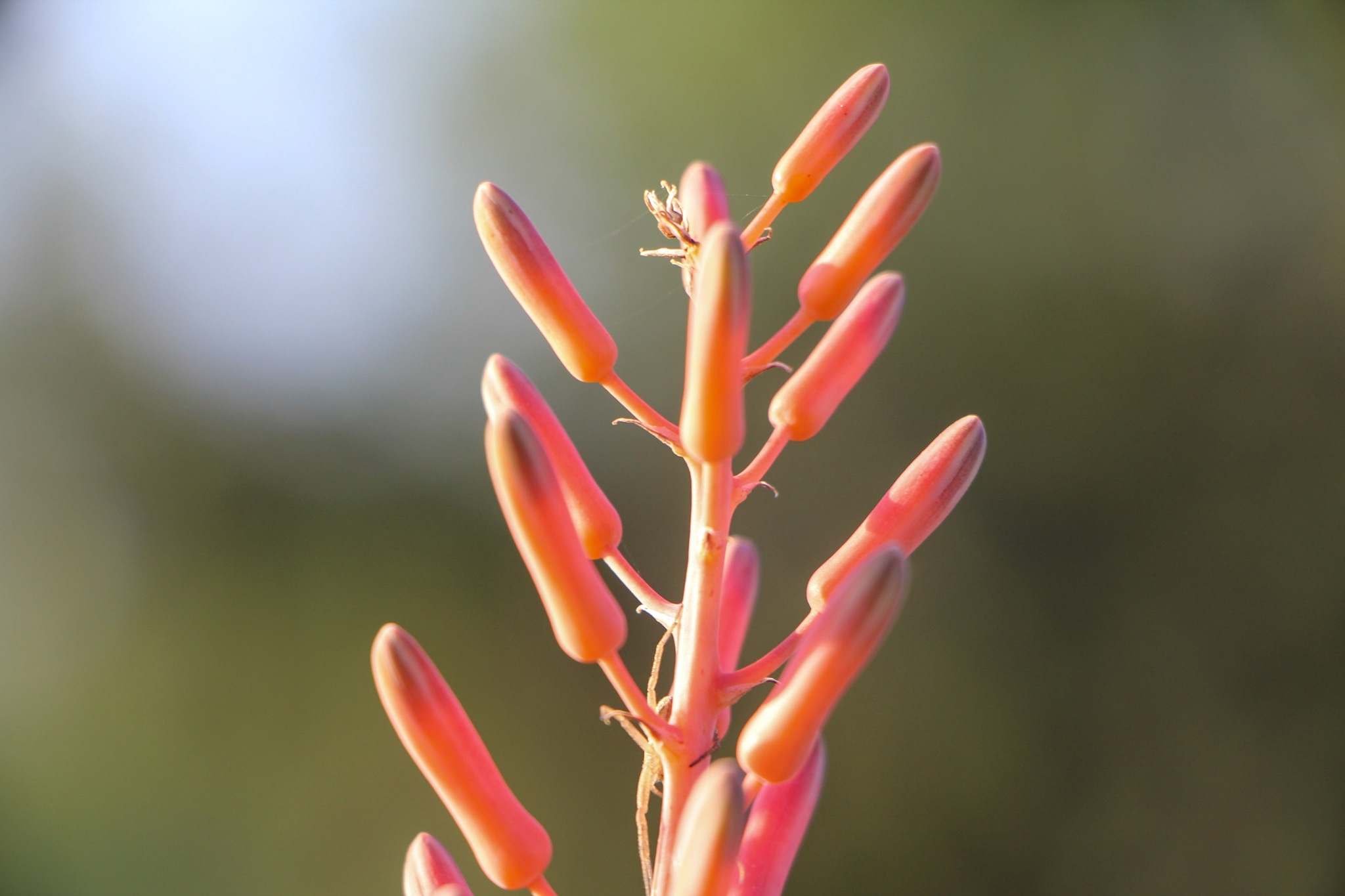Coral colour by Scapes By Jana